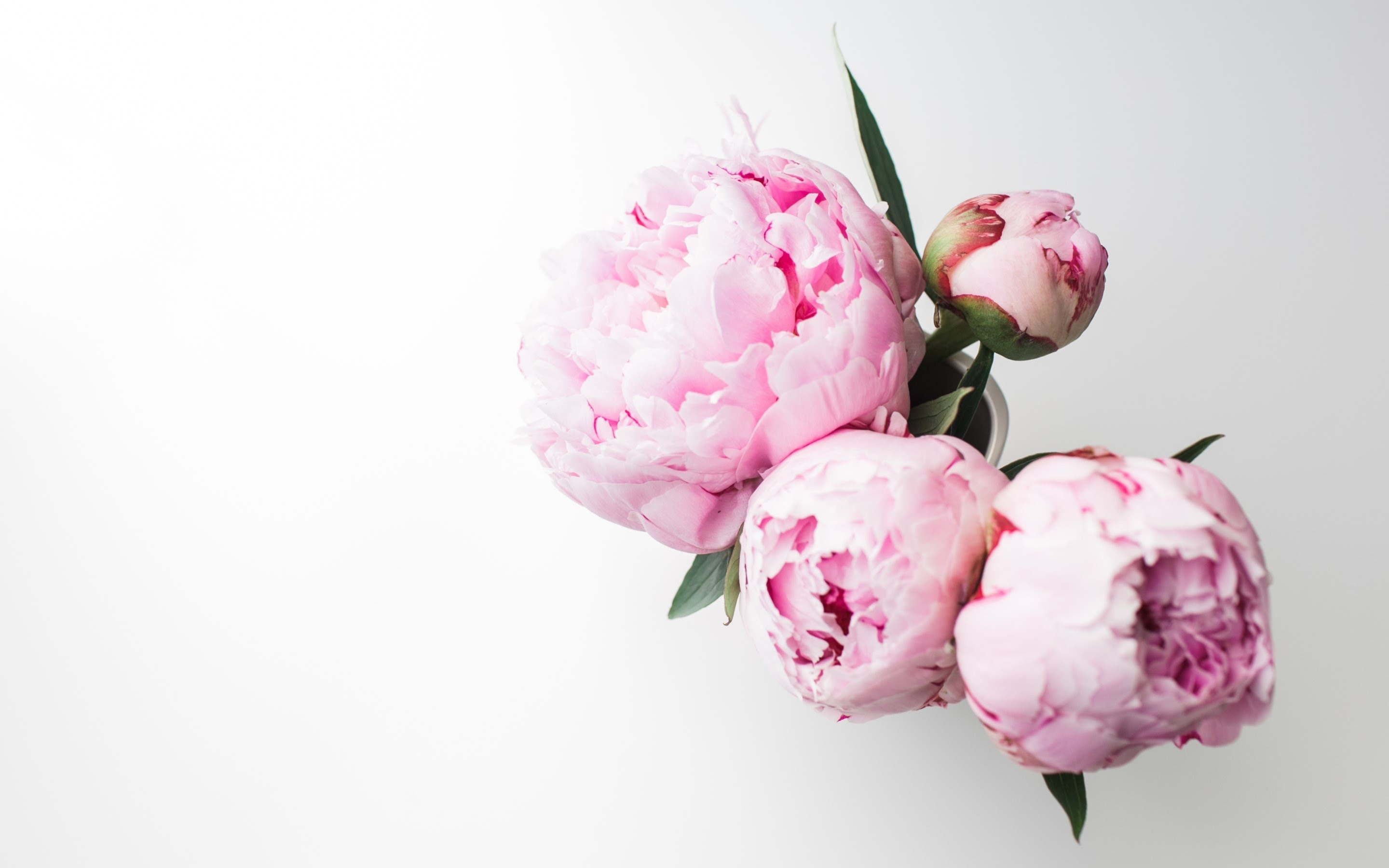 4K HD Wallpaper: Bouquet of Peonies · By Andreea with a Canon EOS 5D Mark II