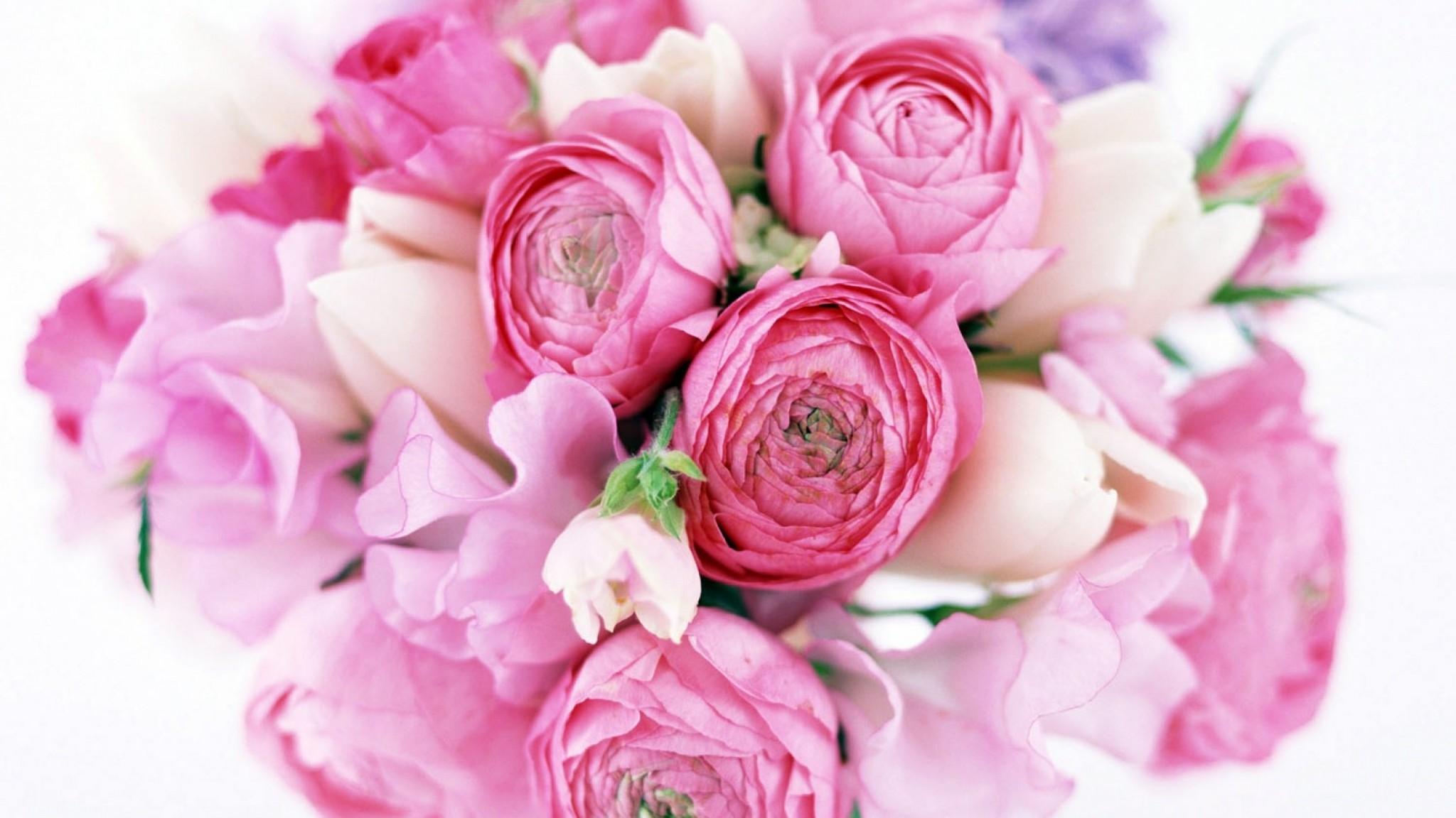 Preview wallpaper peonies, tulips, flower, flowers, tender 2048×1152