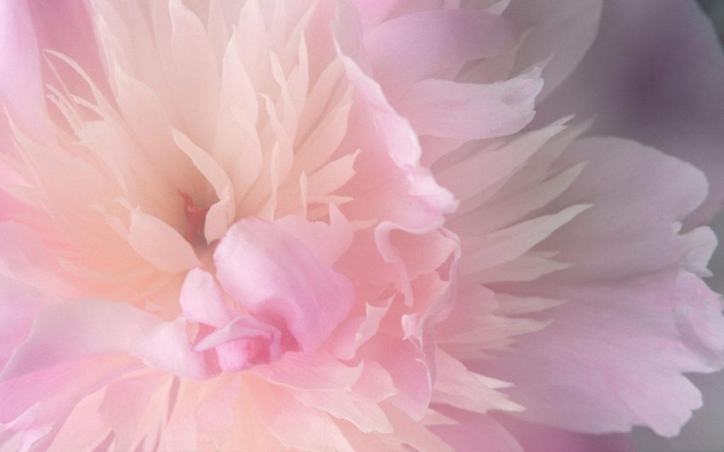 Download Abstract Mac Desktop Flower Pictures Wallpaper   Full HD .