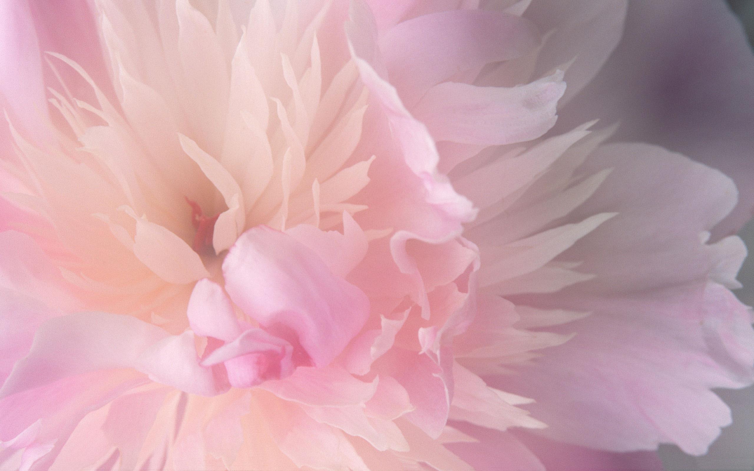Download Abstract Mac Desktop Flower Pictures Wallpaper | Full HD .