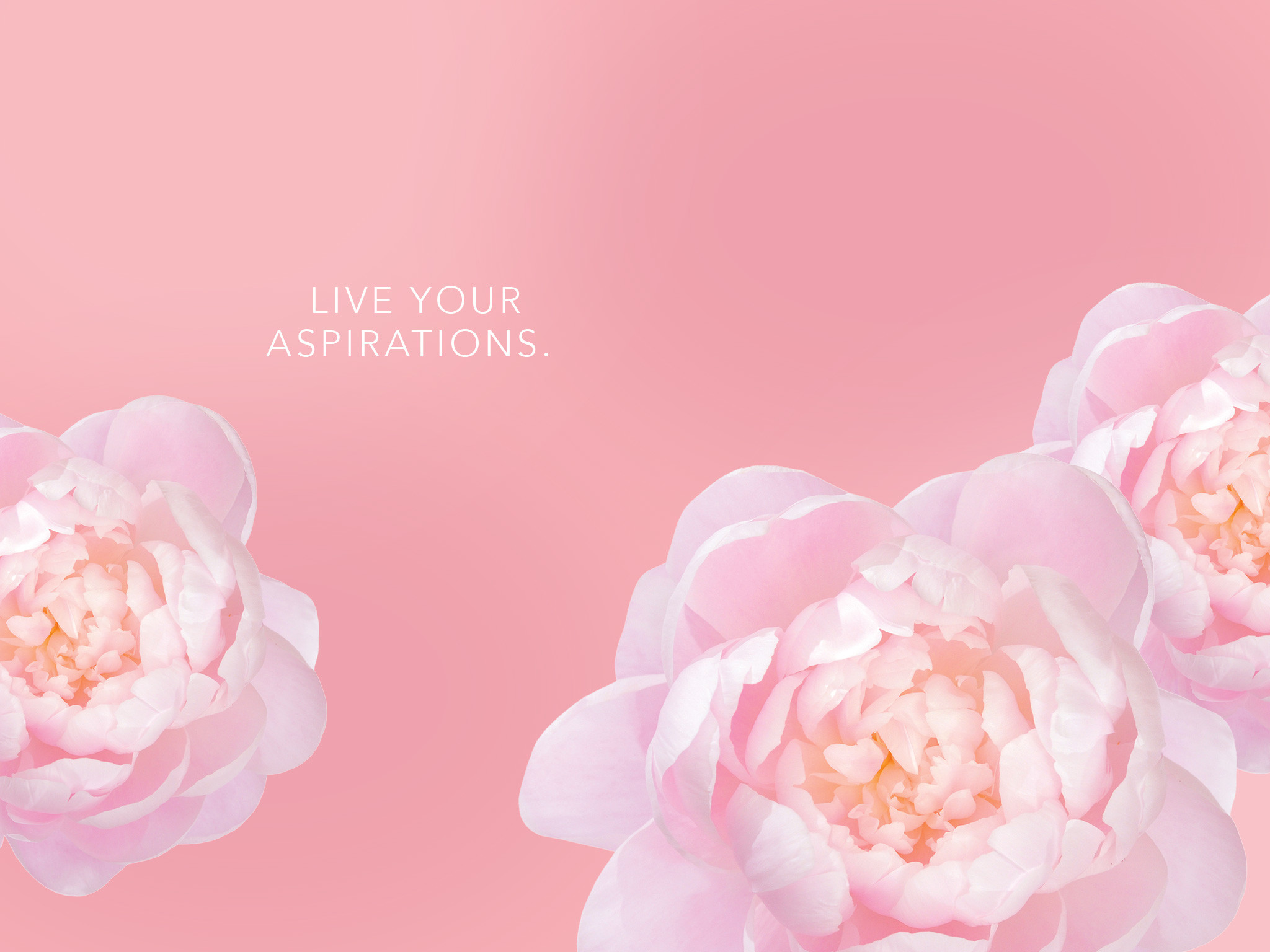 Download Peony Picture Free.