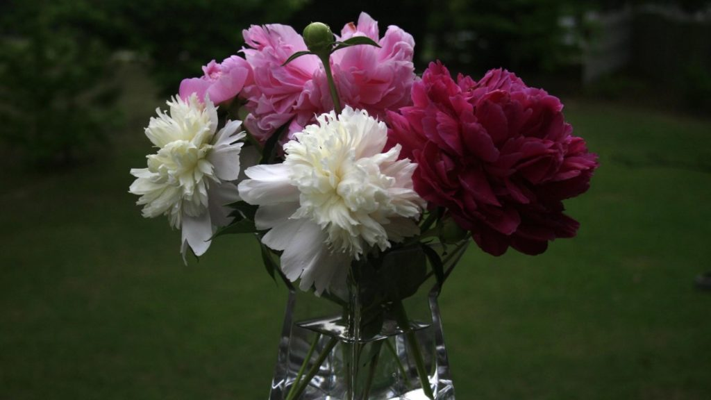 Preview wallpaper peonies, bouquet, vase, close-up 2560×1440