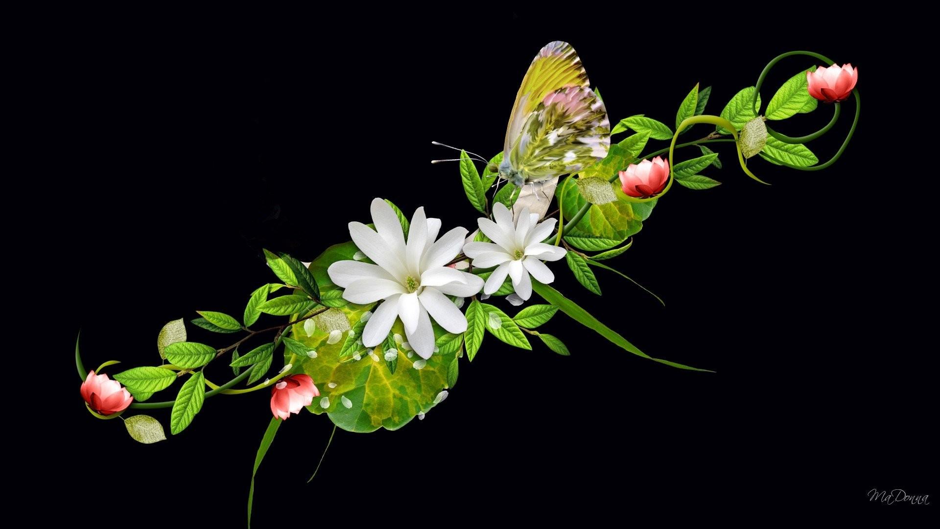 0 Beautiful Butterfly Wallpaper Beautiful Butterfly Wallpaper
