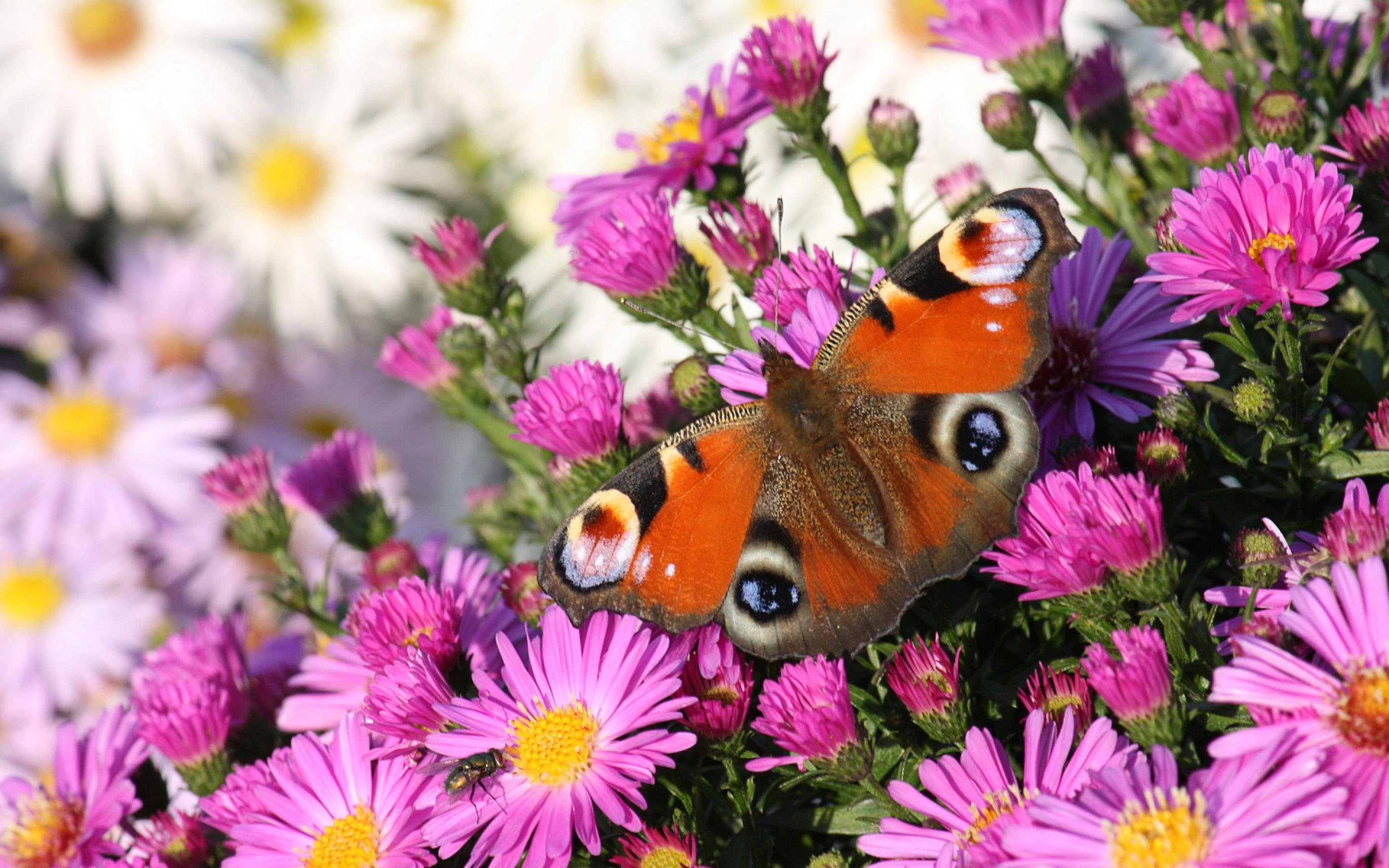 Beautiful Flower With Butterfly Wallpaper