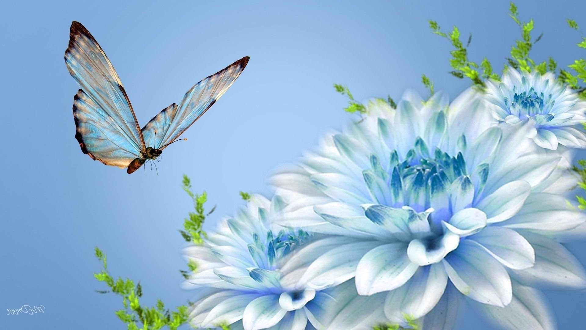 Beautiful Pictures Of Flowers and butterflies Birds New butterfly and Flower  Wallpapers Wallpaper Cave