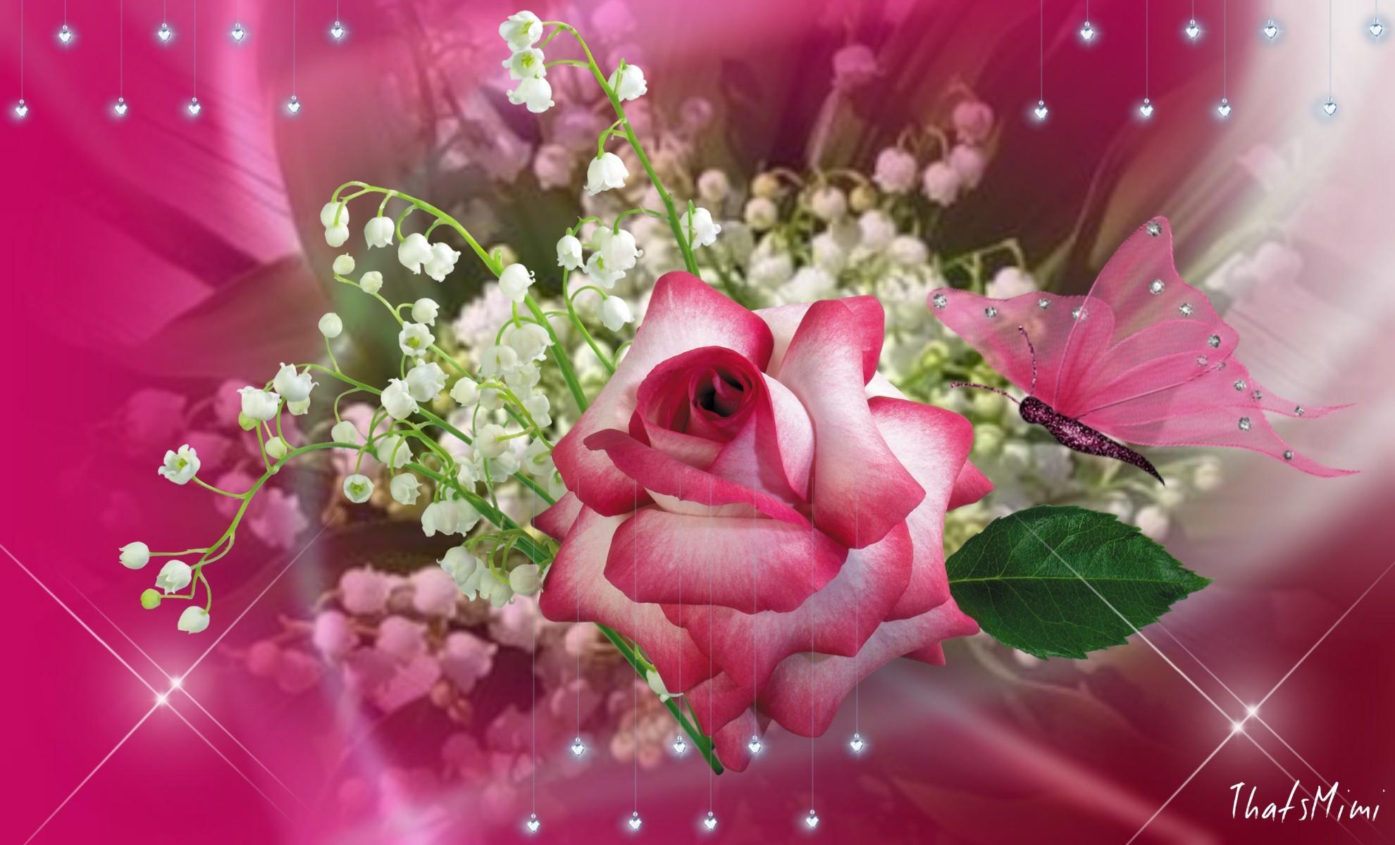Beautiful Single Pink Rose Butterfly Pretty Amazing Flower Desktop  Wallpapers