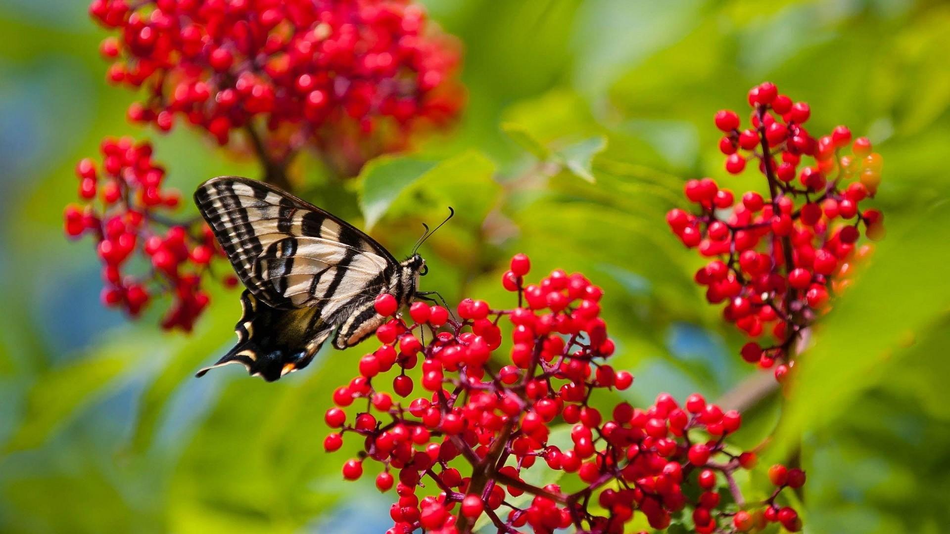 Beauty Butterfly On Red Flower HD Wallpaper