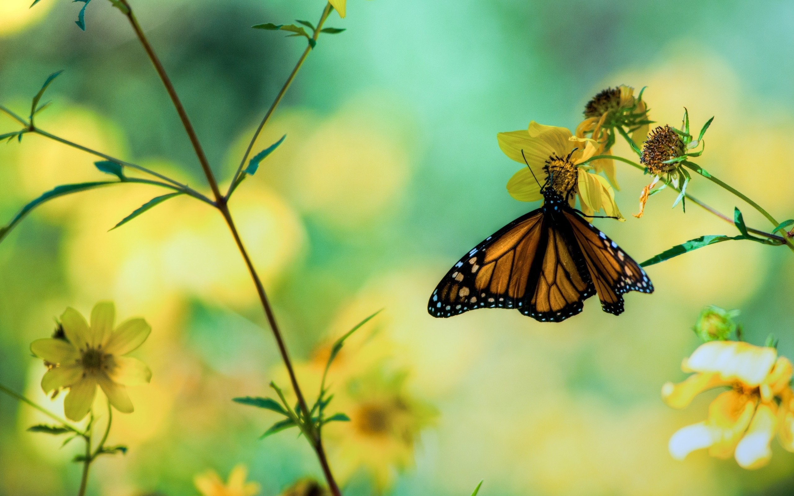 wallpaper.wiki-Beautiful-Butterfly-Perched-on-Flower-Background-