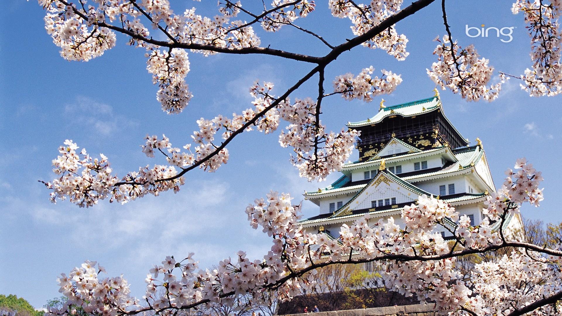 spring, cherry, blossom