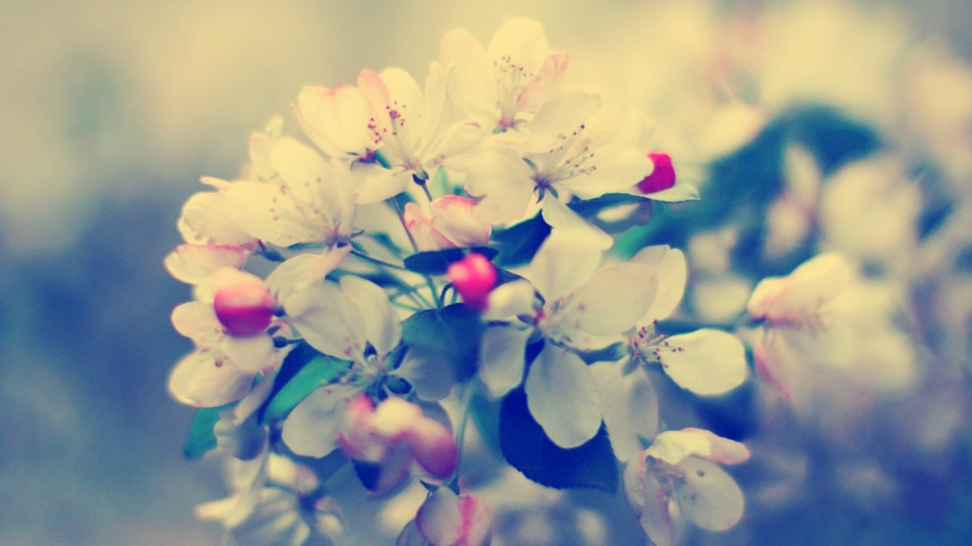 Preview wallpaper blossom, branch, flower, glare 1920×1080