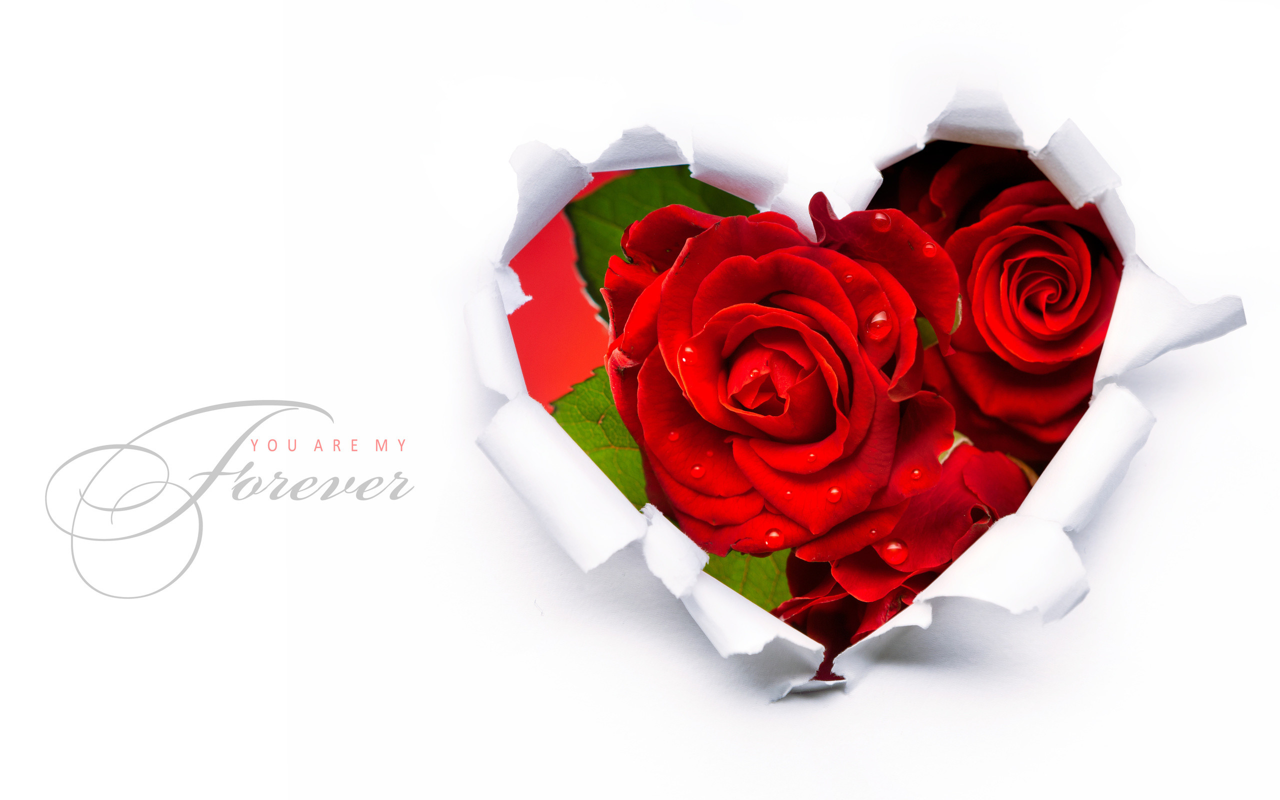 Red Roses In A Heart Shape Wallpapers – – 581420