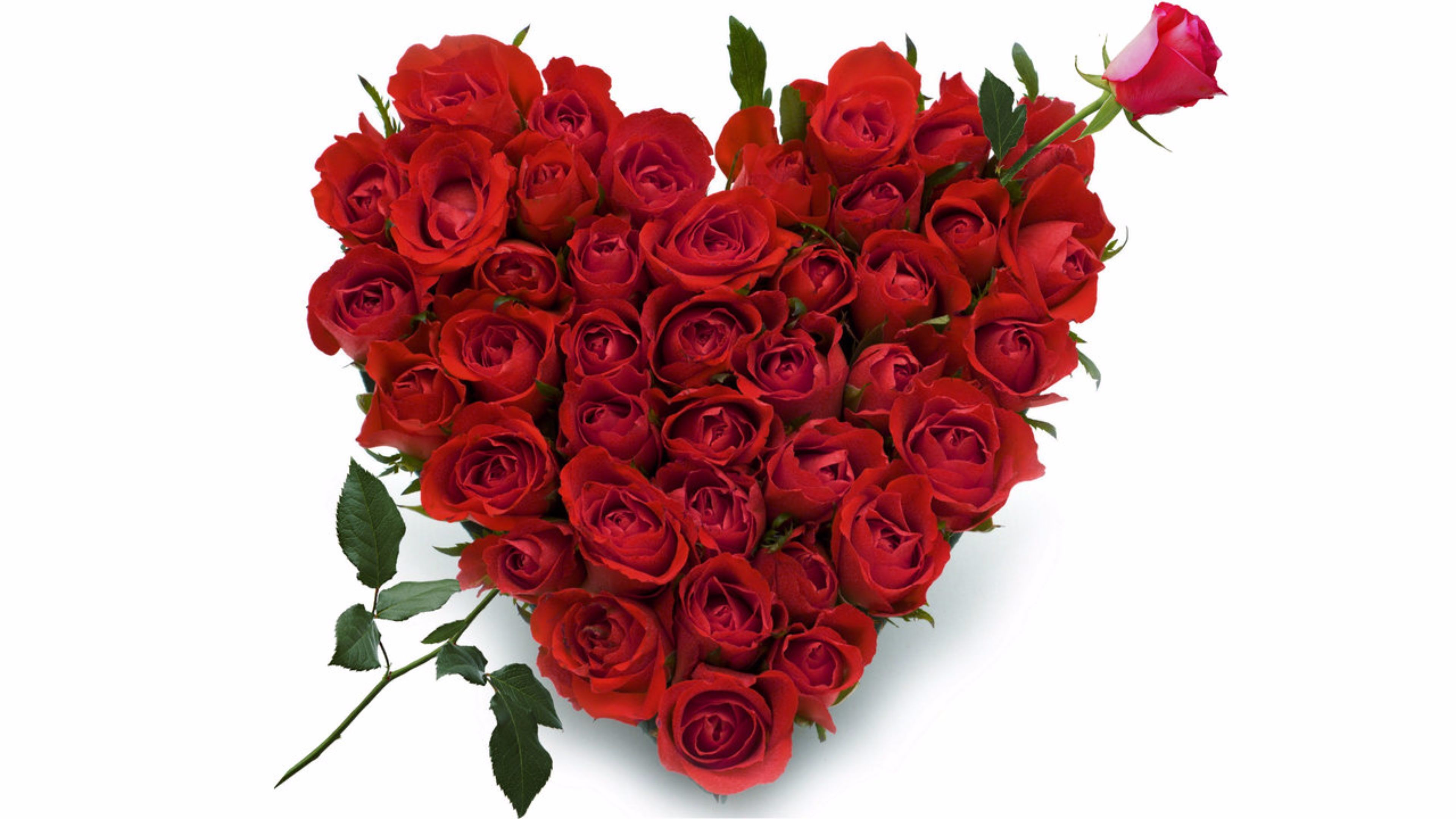 Our wide range of Red Rose Heart Shape Arrangement flowers buy online. a  variety of carnations on a heart-shaped Oasis base to create a special  Valentine's …