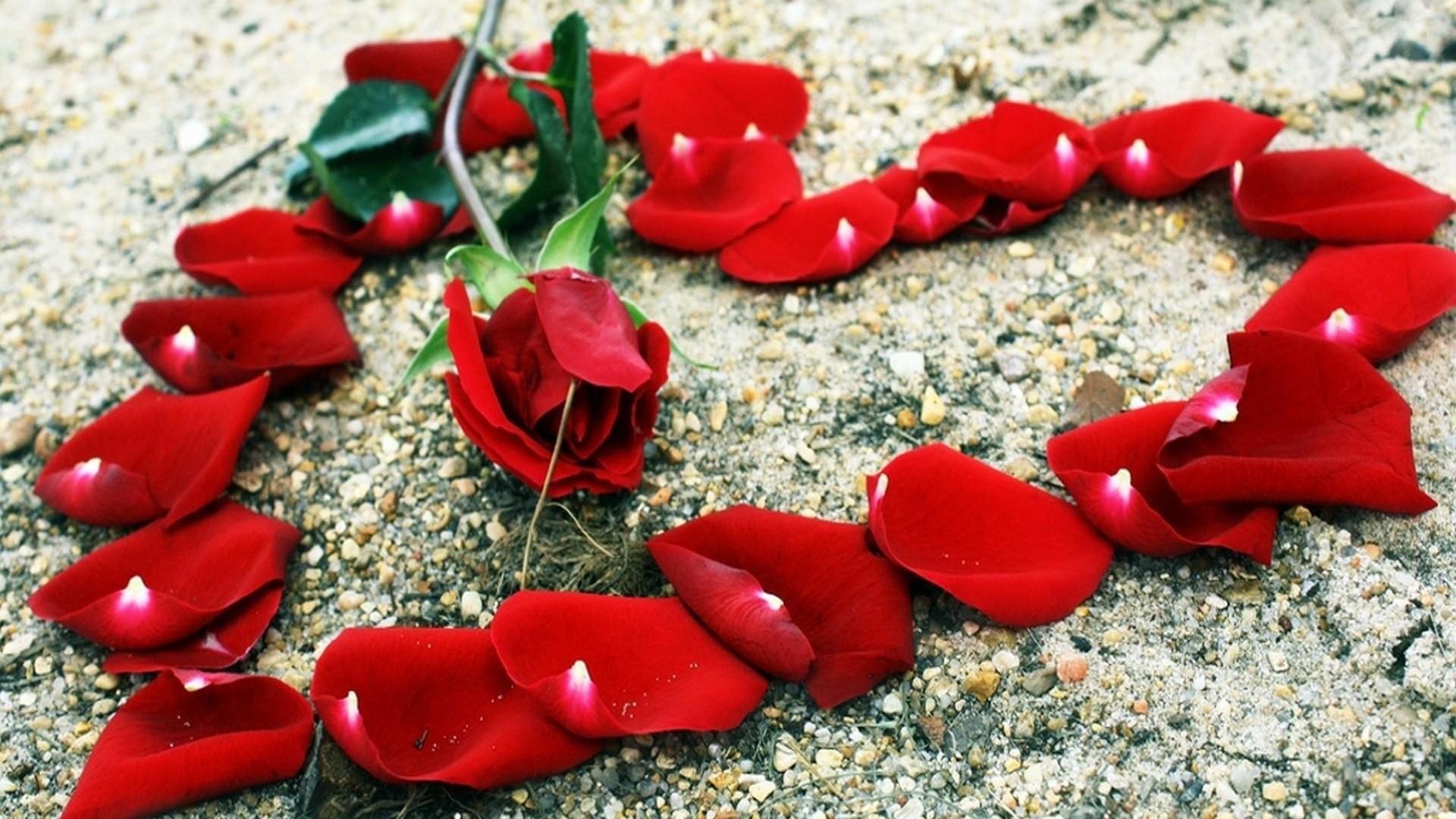 Wallpaper rose, petals, heart, stones, romance