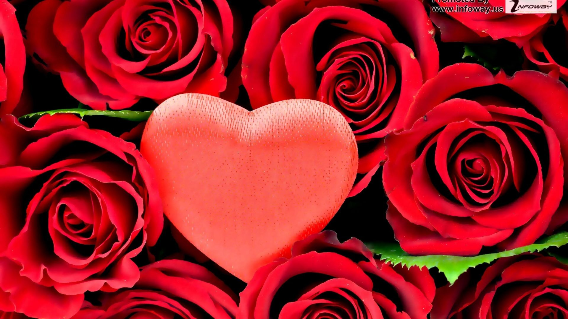 #DD1122 Color – Love Heart Flowers Roses Red Wallpaper Flower Hd 3d for HD  16