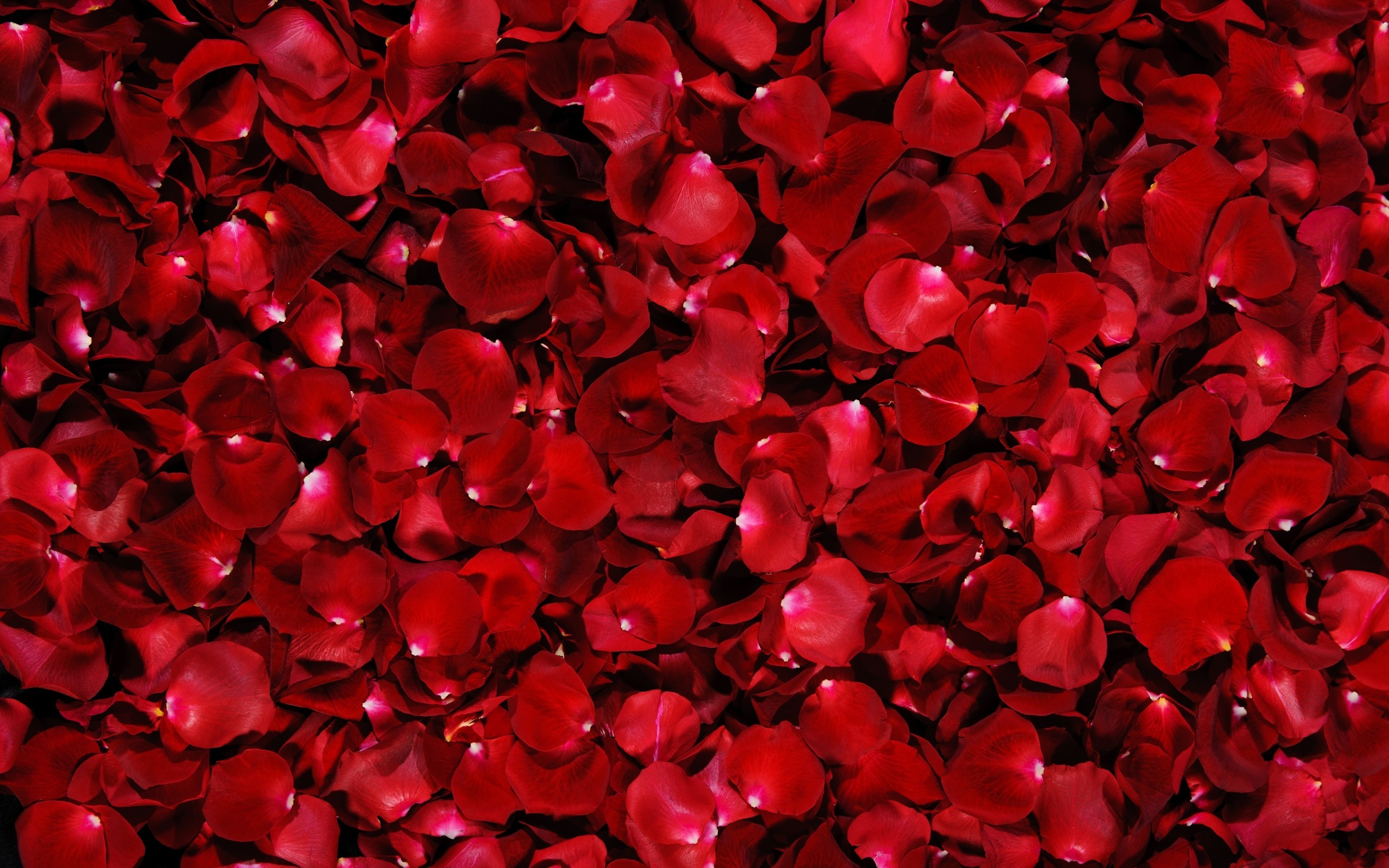 Image from https://www.flowerhdwallpaper.com/wp-content/uploads/2014/04/red- rose-pics-wallpapers-6.jpg. | 50 ѕнα∂єѕ σf яє∂ | Pinterest | Black  backgrounds …