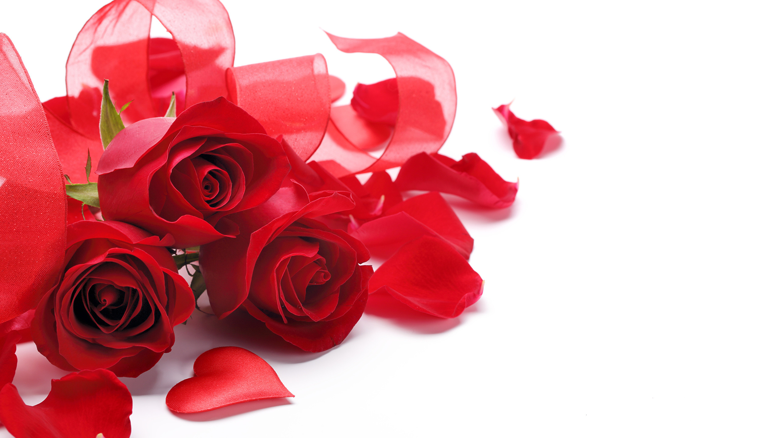 Pictures Heart Red Roses Petals Flowers Three 3 White background 2560×1440