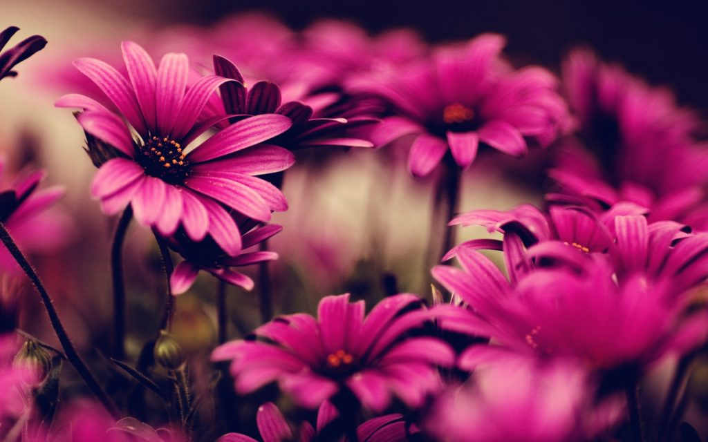 40 BEAUTIFUL FLOWER WALLPAPERS FREE TO DOWNLOAD   Pinterest   Flower  backgrounds, Flower and Resolutions
