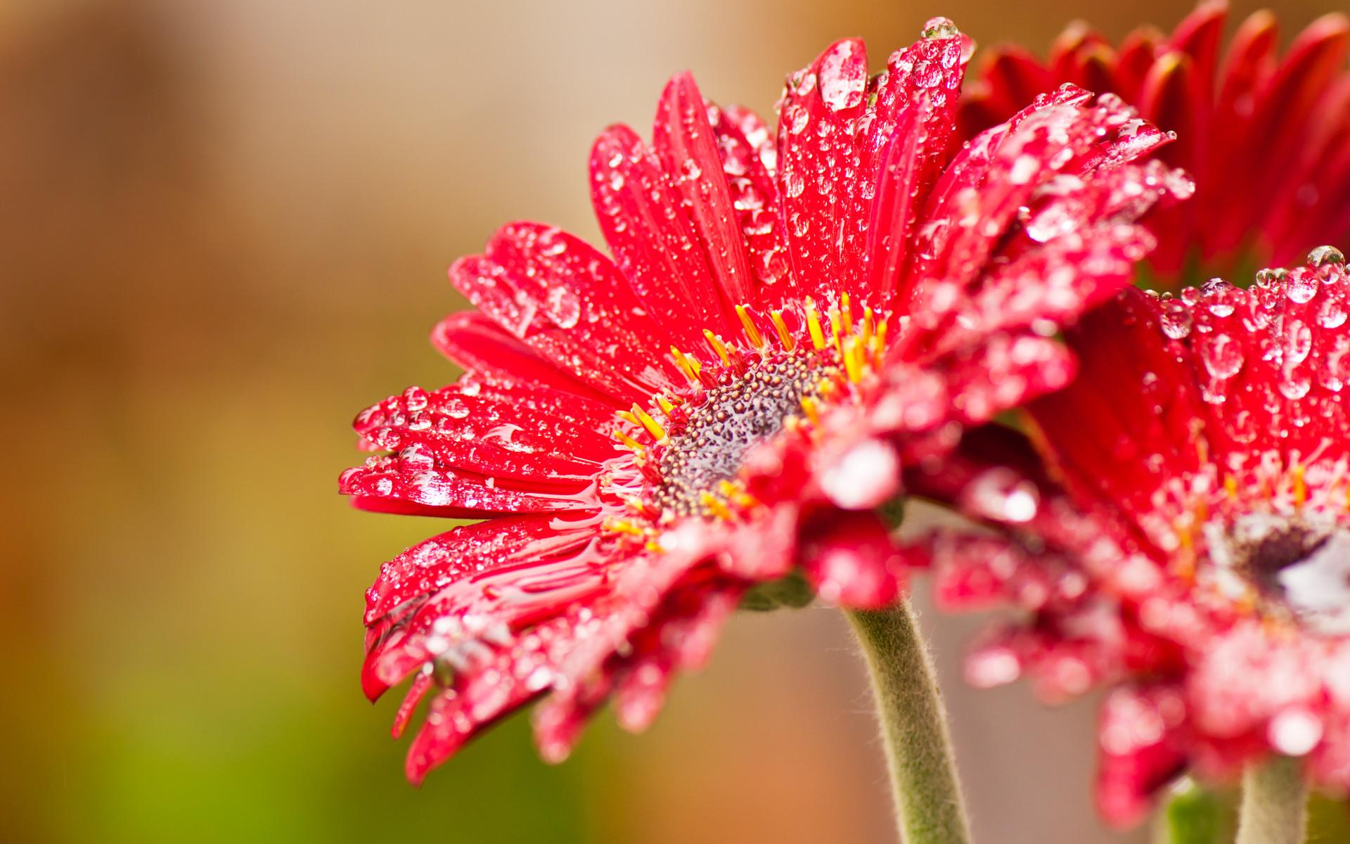 Flower Wallpaper Widescreen pic1367 Amazing