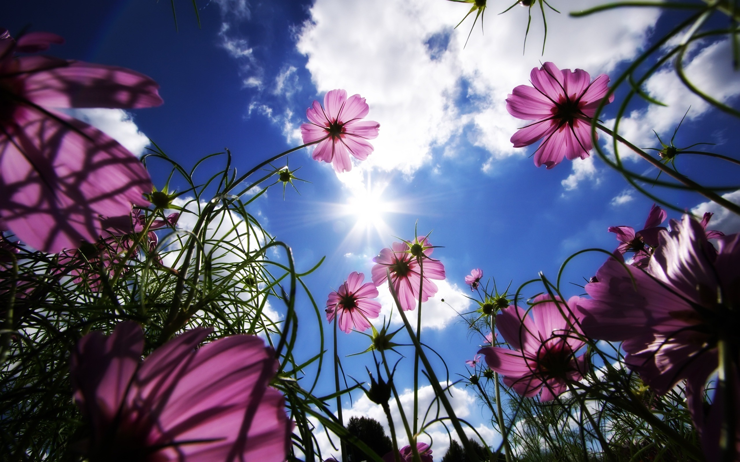 Sunny Flowers Wallpaper Flowers Nature