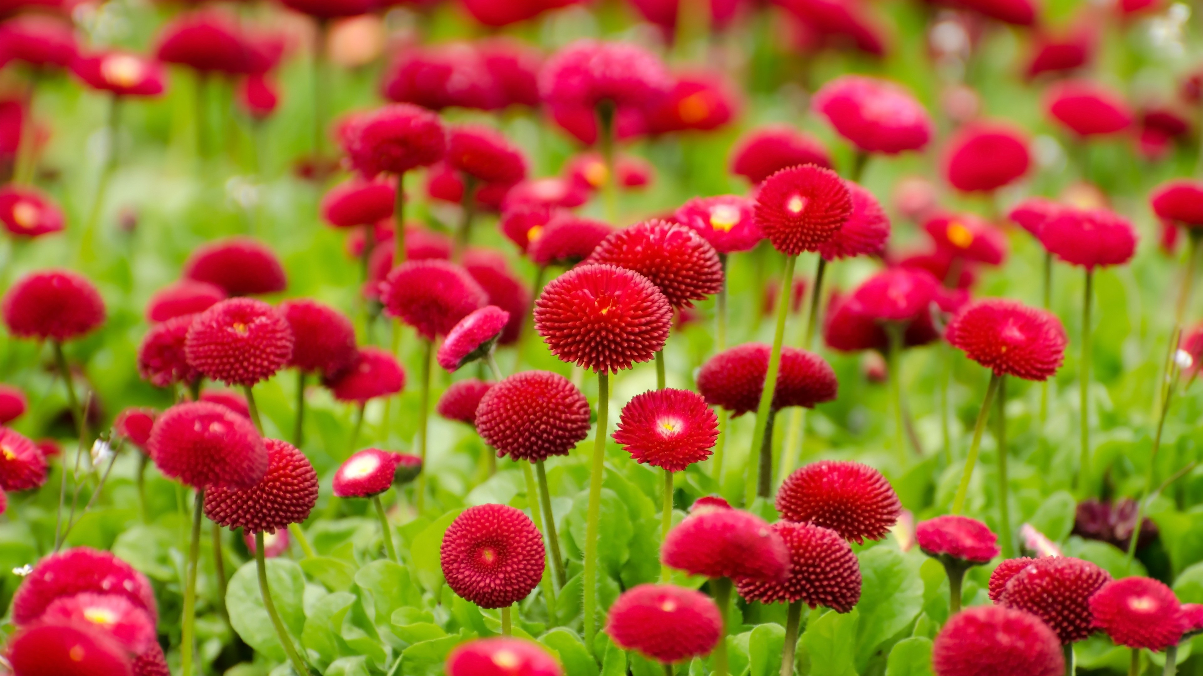 Summer Red Flowers