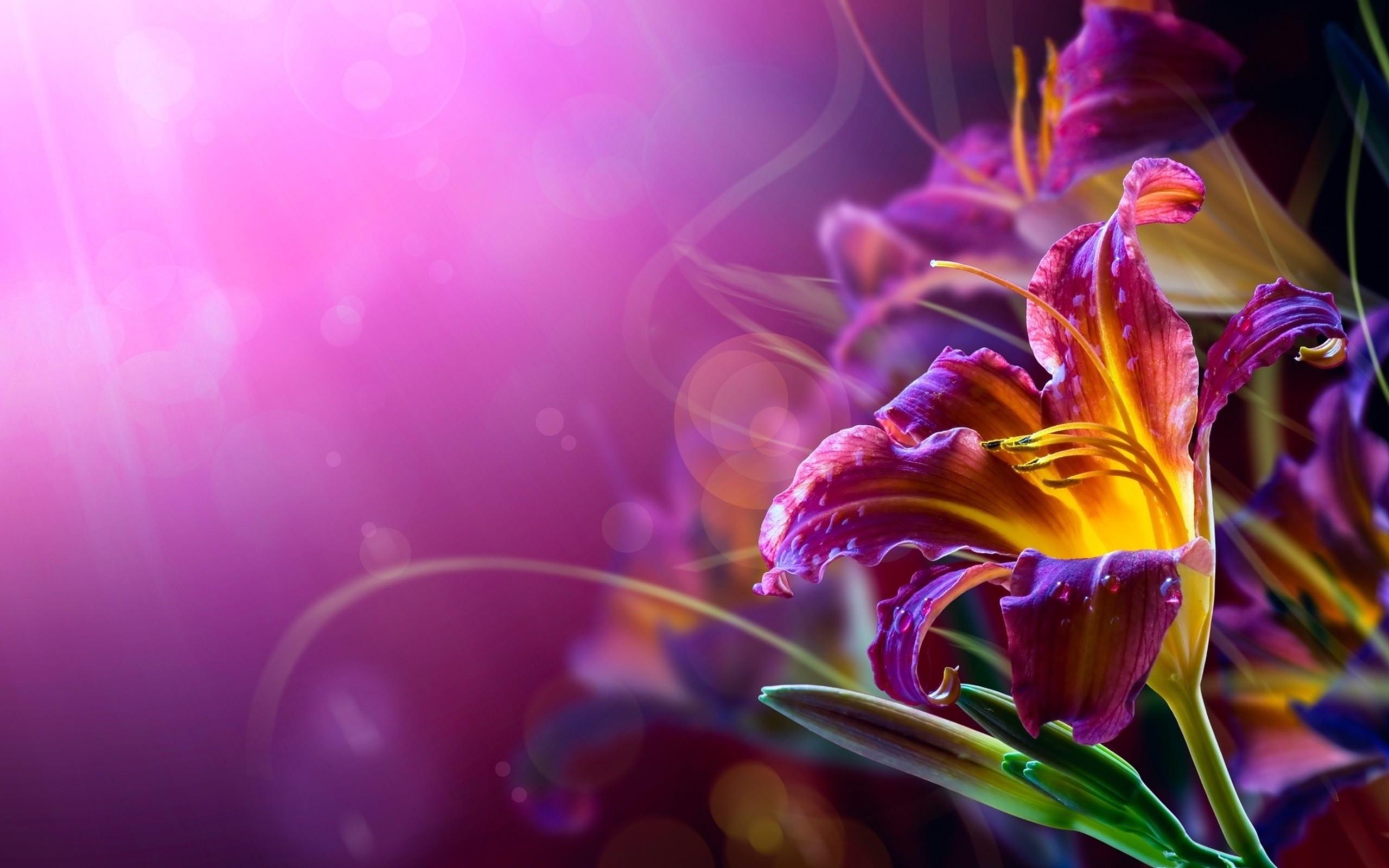 Violet Flower Wallpapers 25399