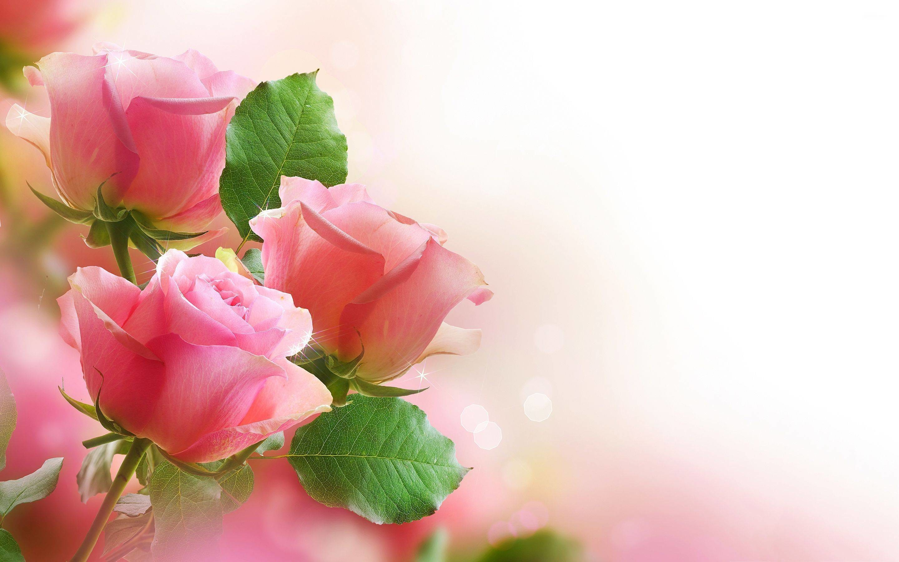 Most Beautiful Flower Wallpapers | HD Wallpapers | Pinterest | Hd wallpaper  and Wallpaper