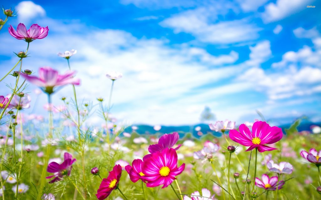 Flower Wallpapers High Definition …