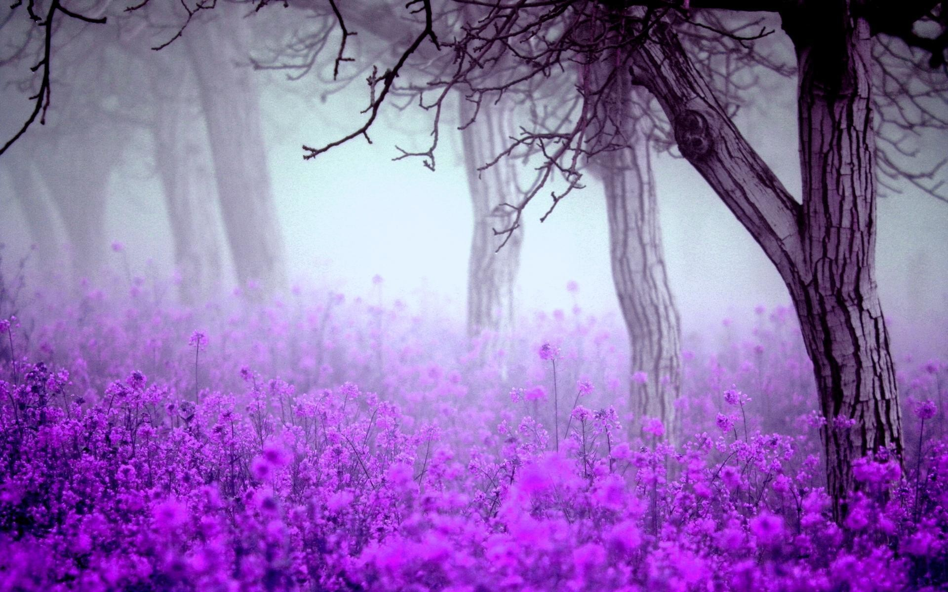 High Quality Fantastic Purple Flowers Wallpaper | Full HD Pictures .