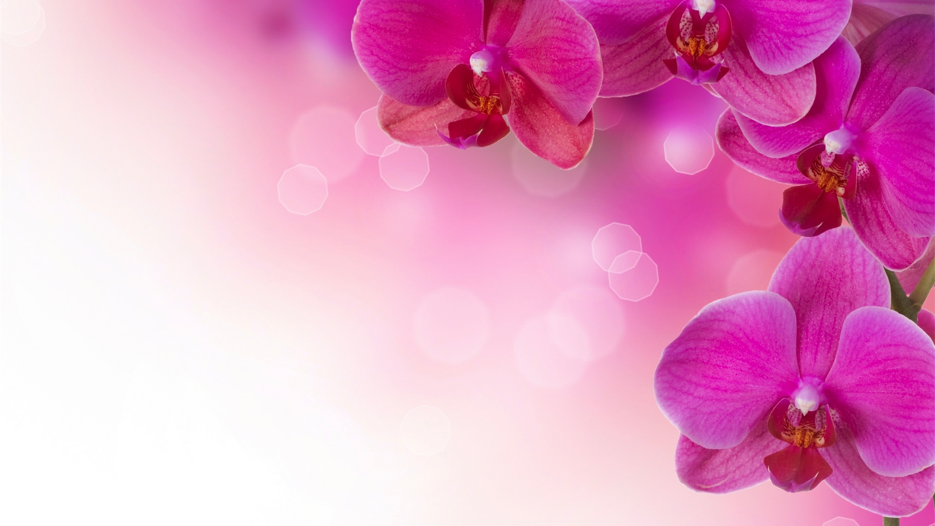 Flower Wallpaper Widescreen pic12fc Background