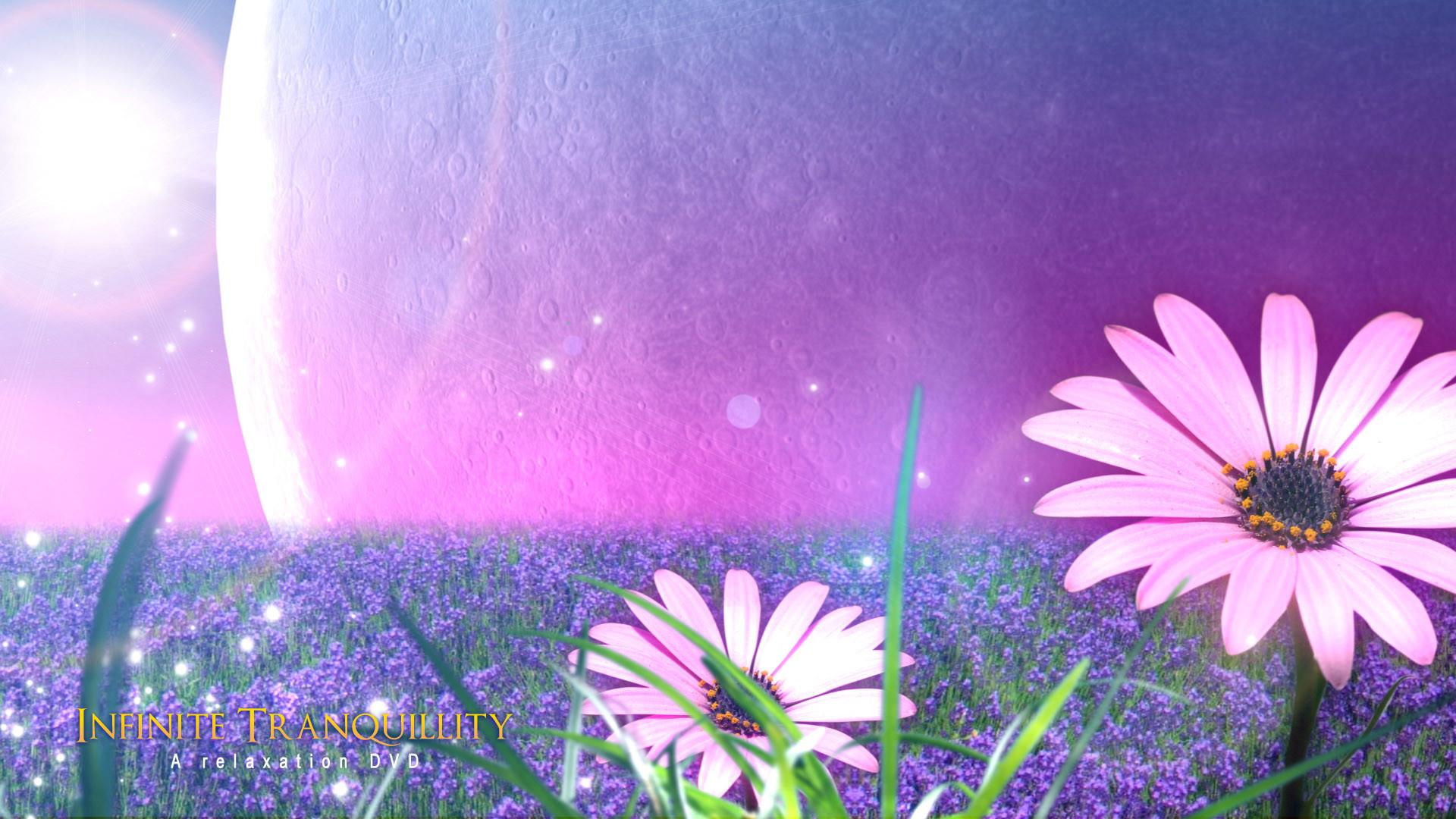 Full HD Flowers Wallpapers – Wallpaper Cave