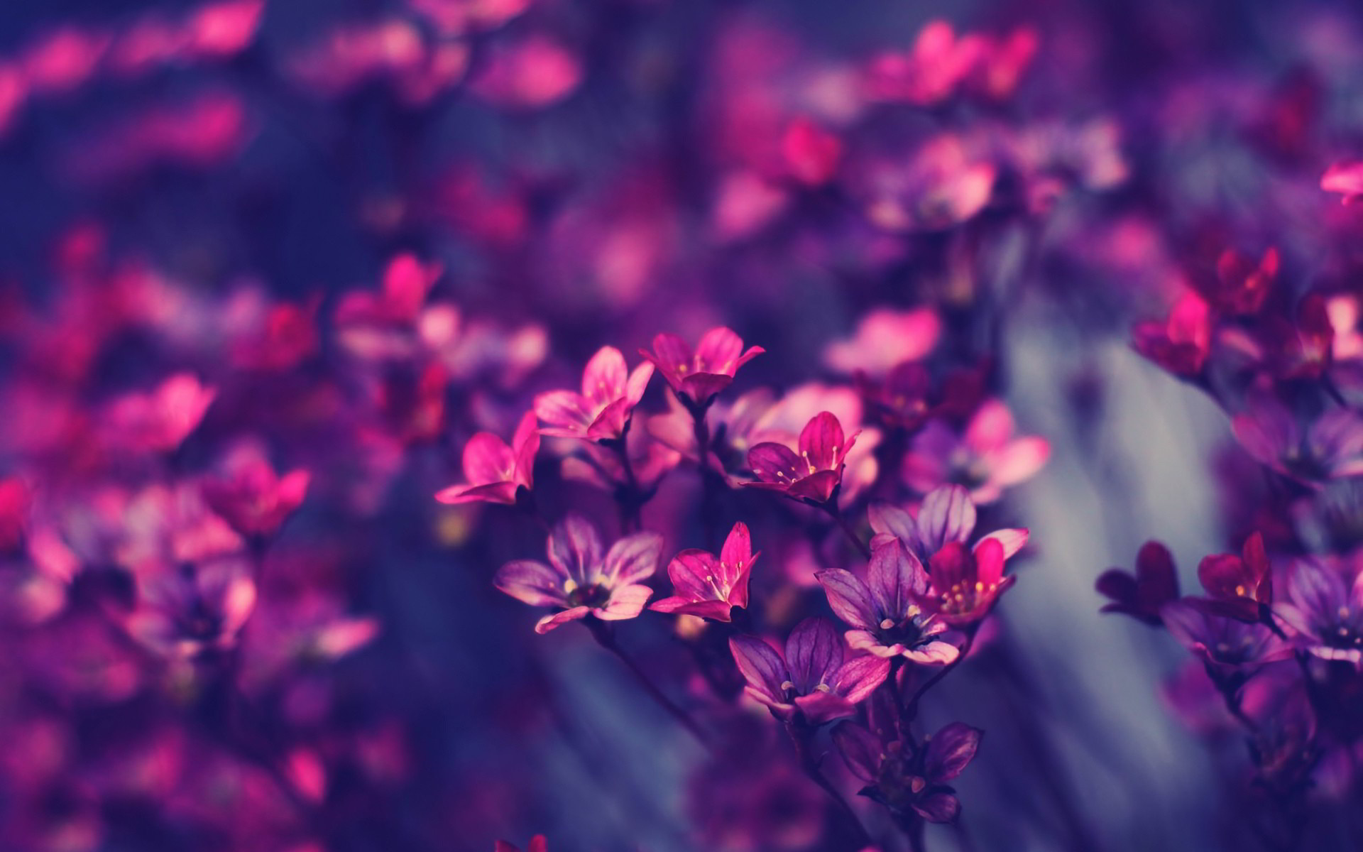 Little purple flowers Wallpapers Pictures Photos Images