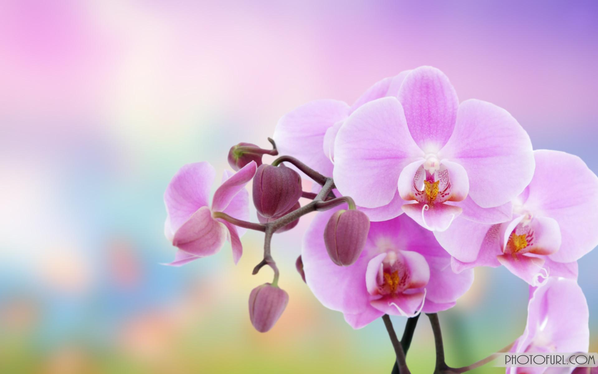 Flowers background | Flower wallpaper | images of flower | #27