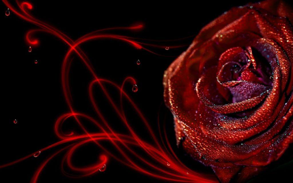 Wallpaper HD 3d Flower Rose – 3D, Flowers Wallpaper Collections .