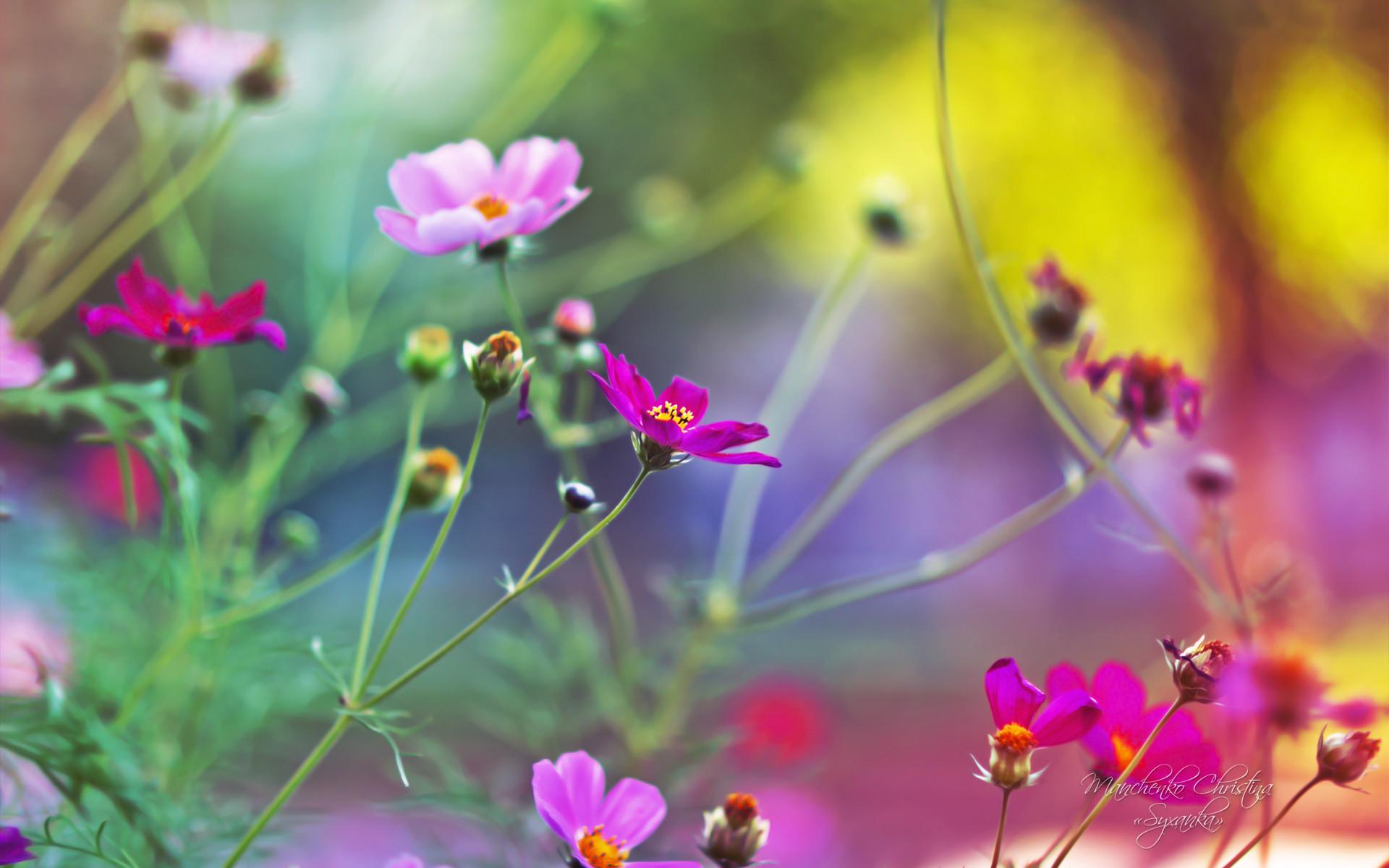 Amazing Flowers wallpaper jpg x desktop wallpaper 175352