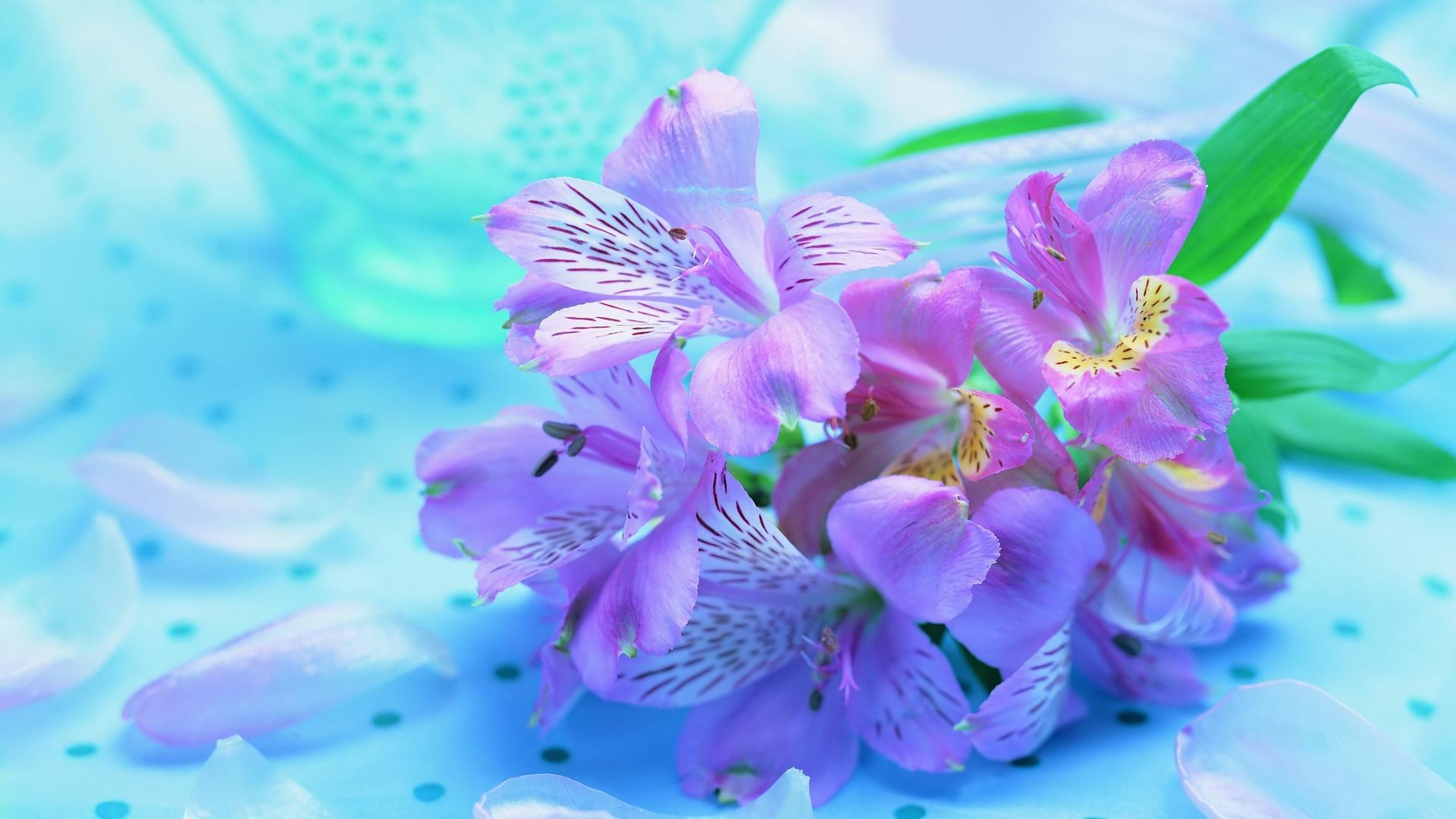 Beautiful flower wallpaper for desktop wallpaper