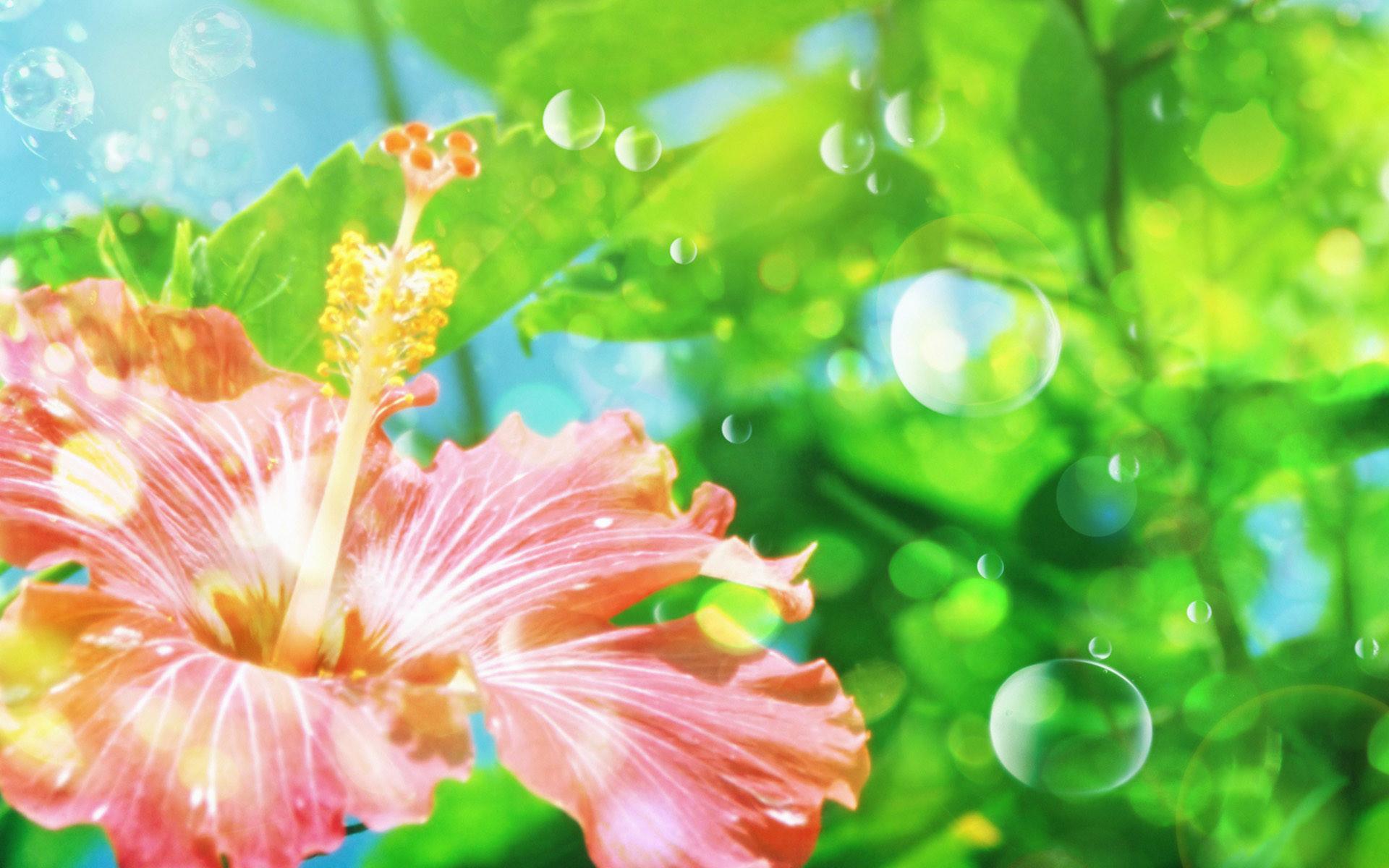 Flower Wallpaper Widescreen pic13aa Background