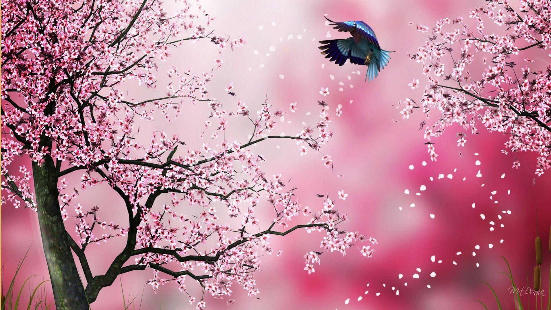 Japanese Sakura Cherry Blossom Tree 2011 Key Chains From Zazzle Images
