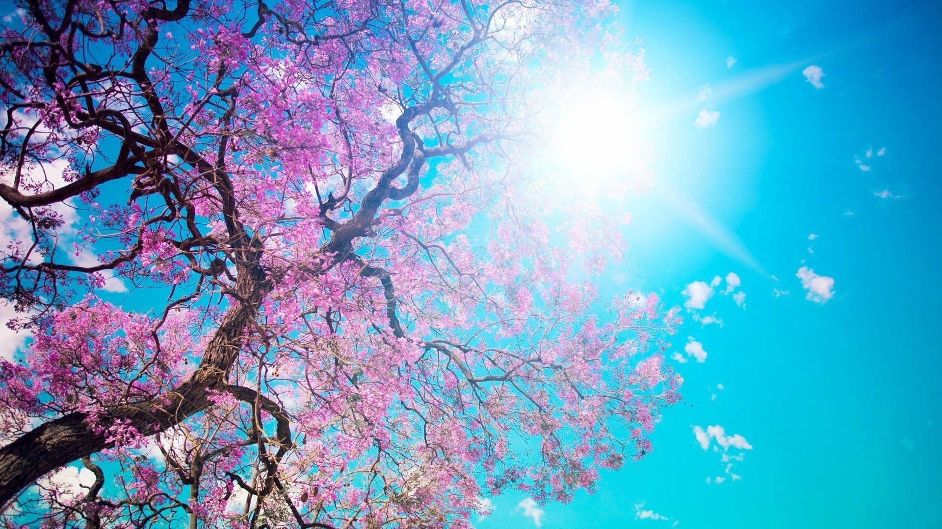 Cherry Blossom Desktop Wallpapers – Wallpaper Cave
