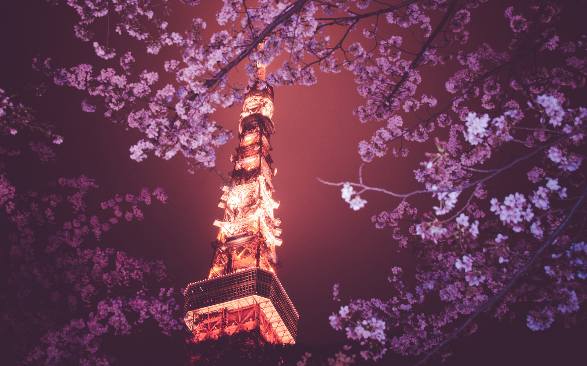 Sakura Blossom Wallpaper Free Sakura Blossom Background Free .