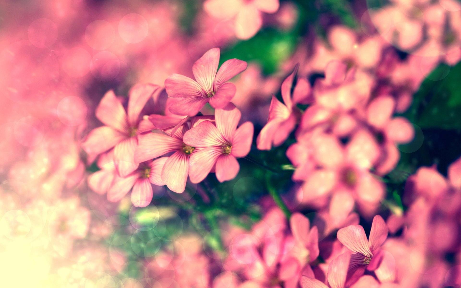 japanese cherry blossom wallpaper – Google zoeken