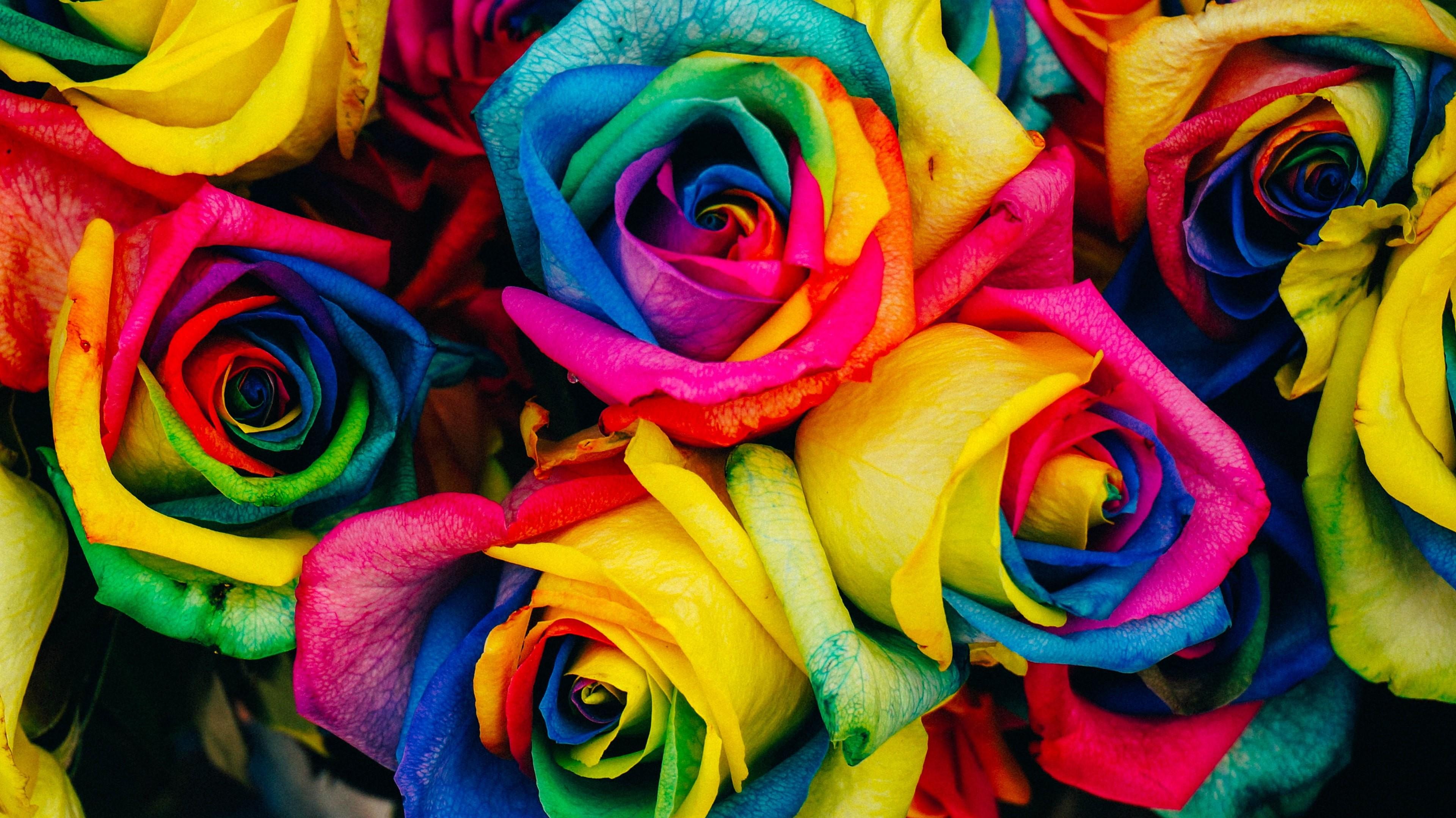 Rainbow Rose Wallpapers Free ~ Sdeerwallpaper
