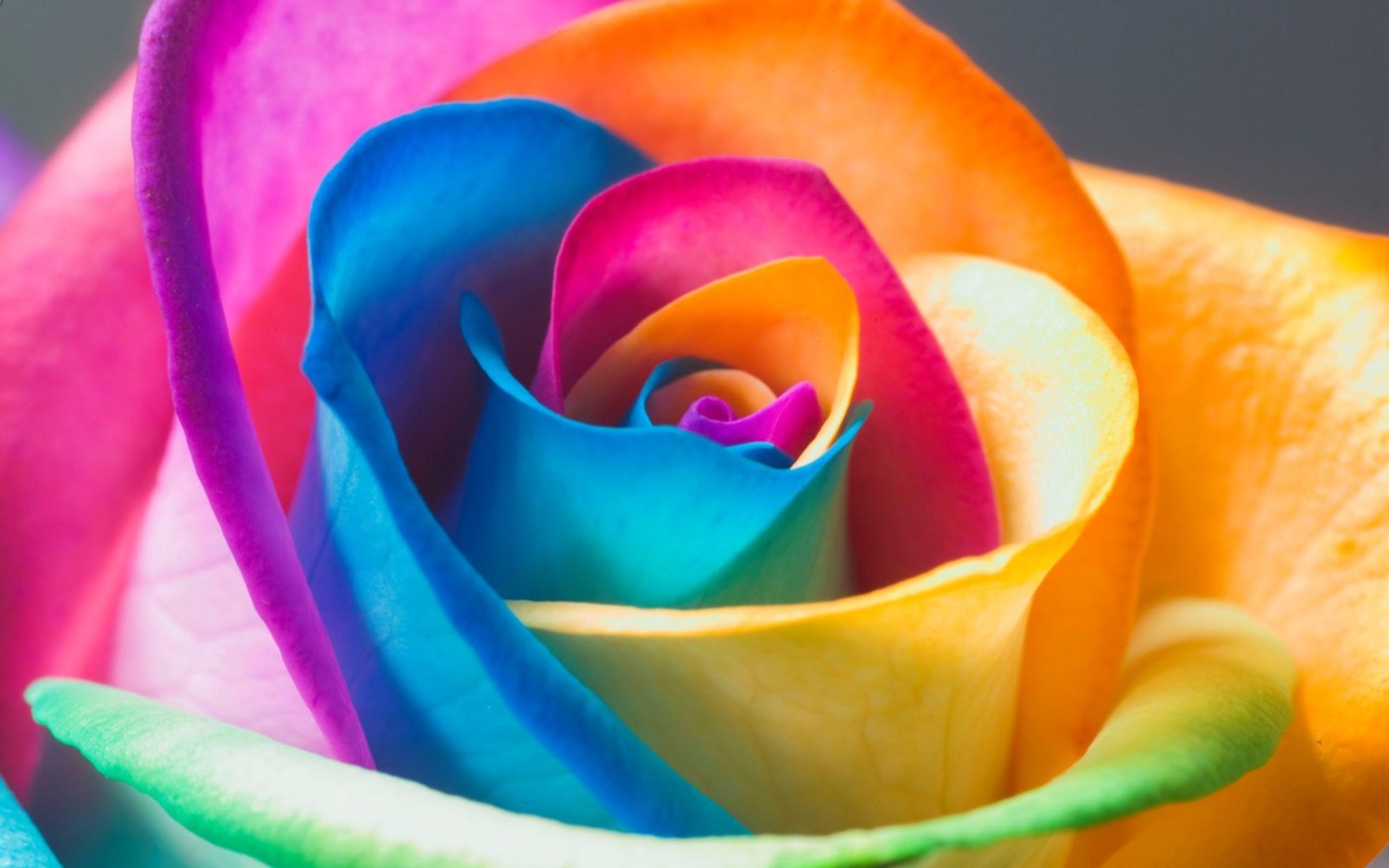 Colorful-Flowers-Rose-Wallpaper