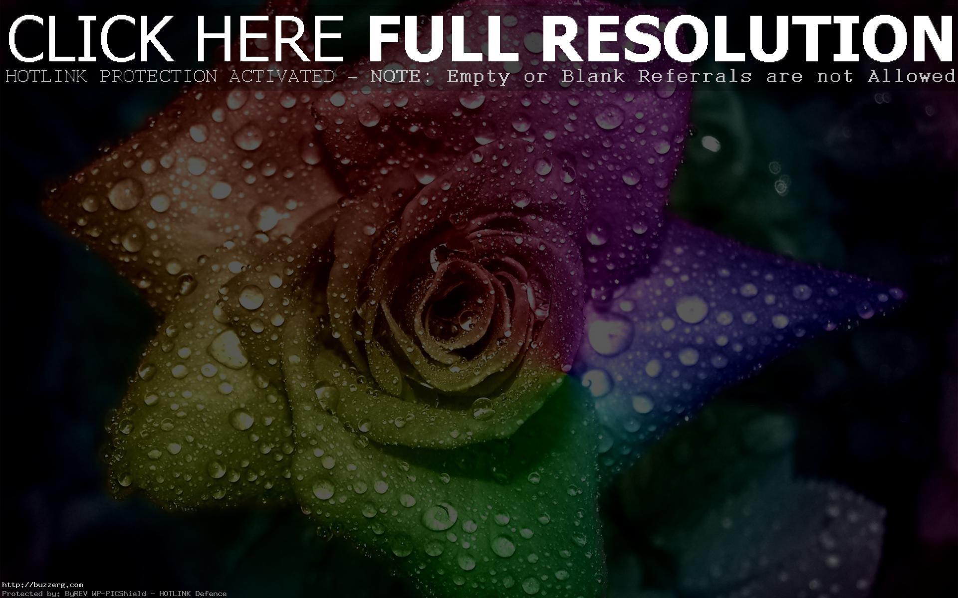 Rainbow Rose (id: 37280)