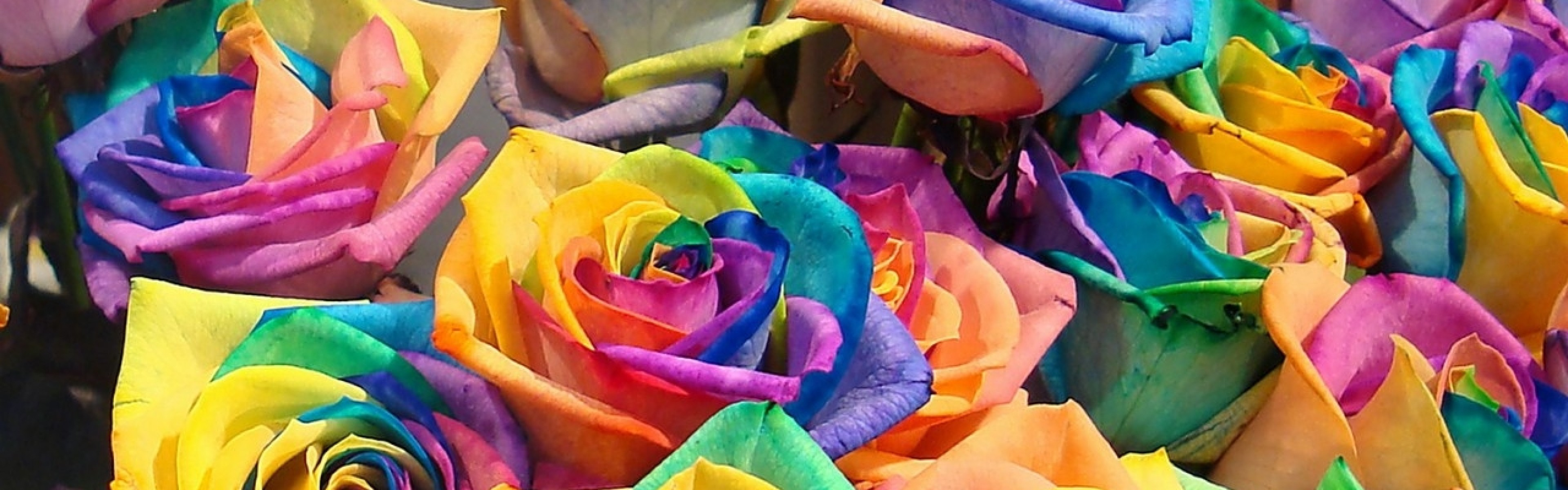 Wallpaper roses, flowers, colorful, buds, bright