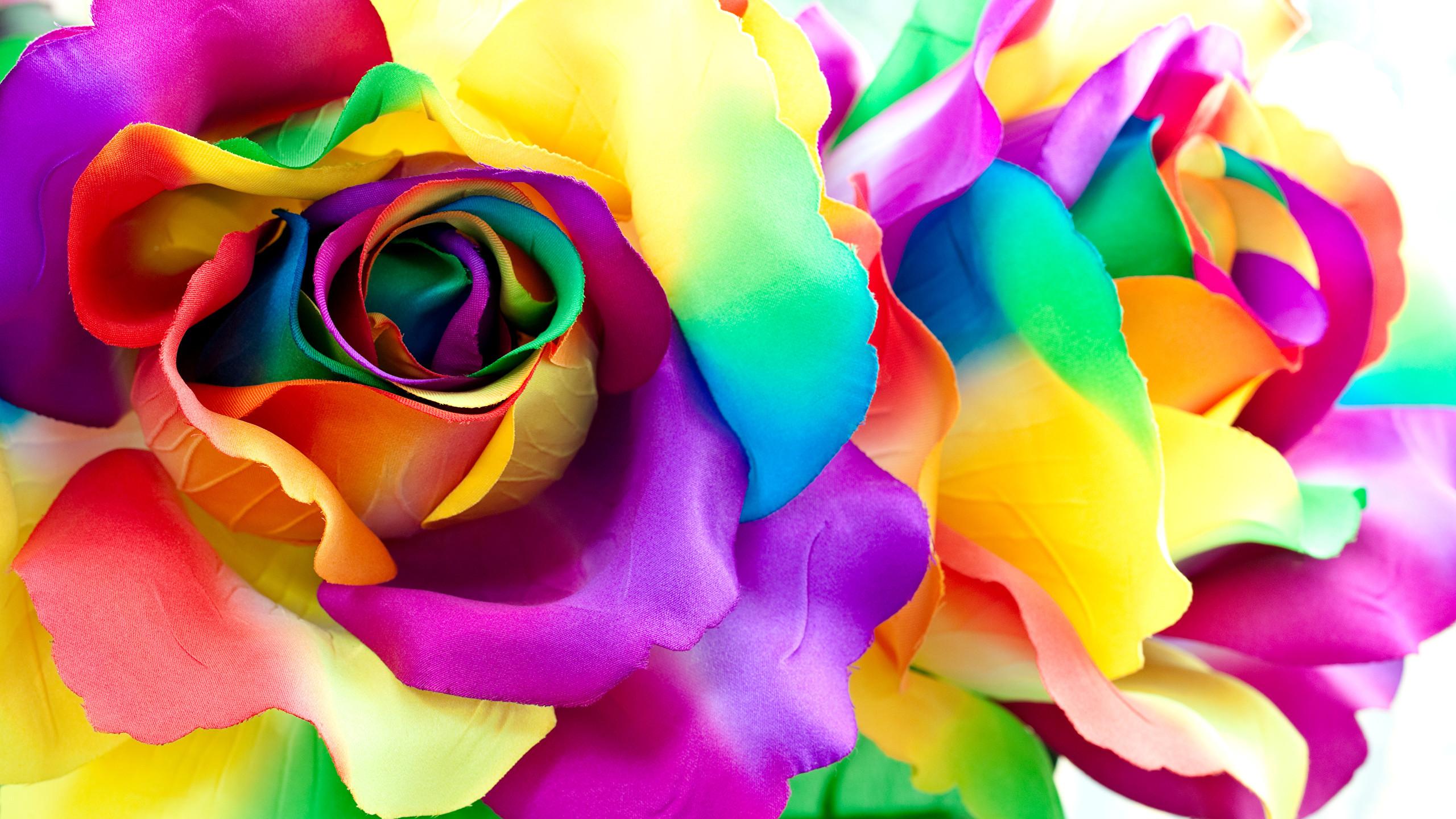 Wallpaper Multicolor Roses Petals Flowers Closeup 2560×1440