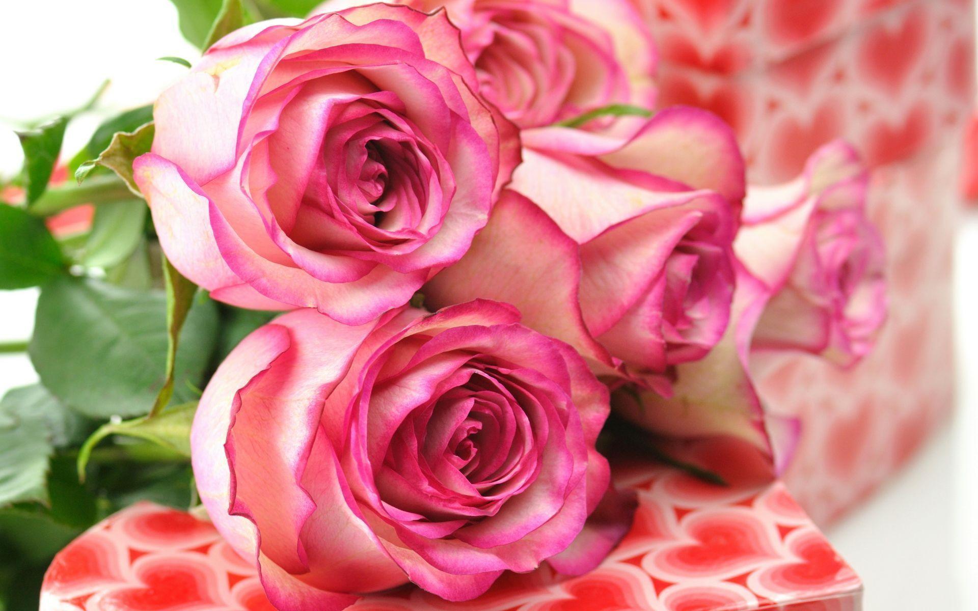 Beautiful Roses Wallpapers For Desktop Hd Cool 7 HD Wallpapers .