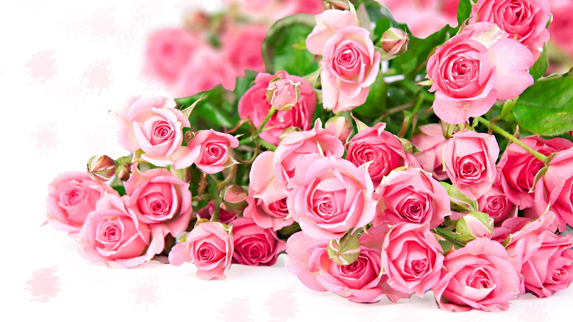 … Beautiful Roses Wallpaper For Mobile World's Top 100 Beautiful Flowers  Images Wallpaper Photos …