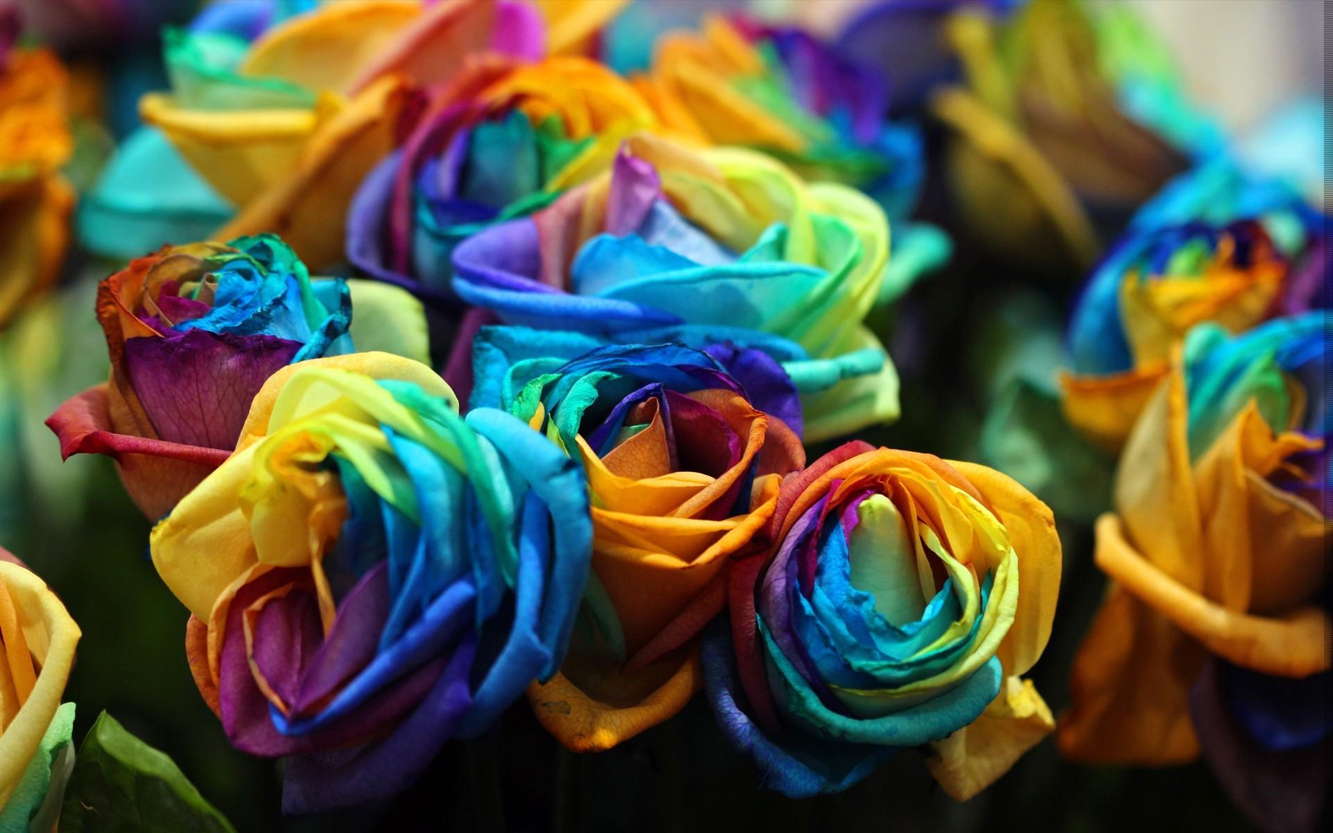 Colors nature flowers artistic wallpaper | | 22552 | WallpaperUP