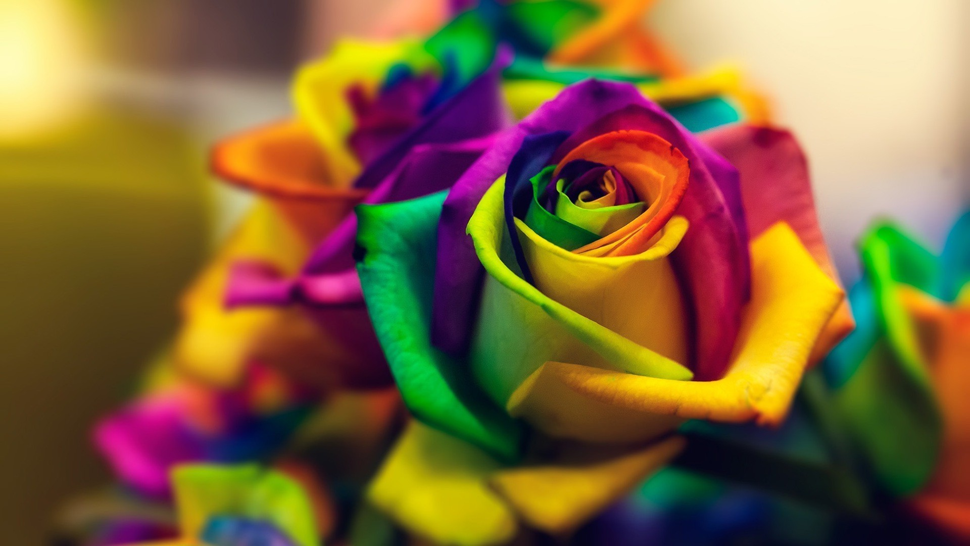flowers, Closeup, Macro, Colorful, Rose Wallpapers HD / Desktop and Mobile  Backgrounds