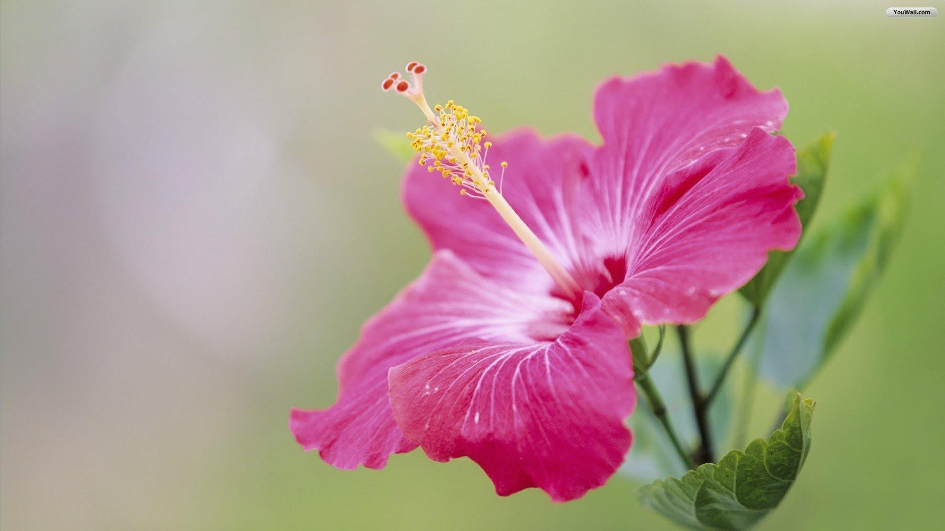 6. veronica-flower-wallpaper6-600×338